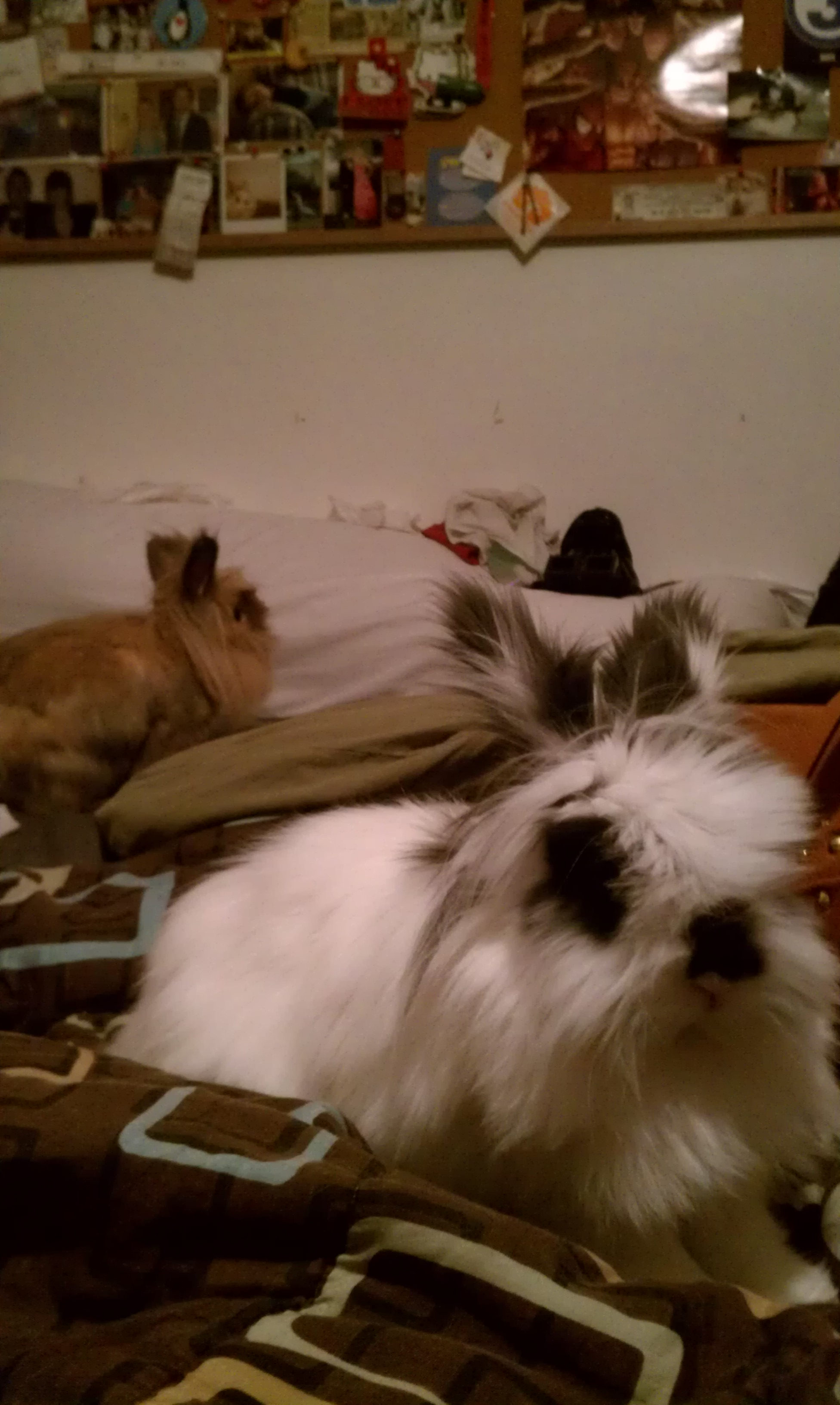 Bunnies Have Infiltrated Their Human's Sleeping Space