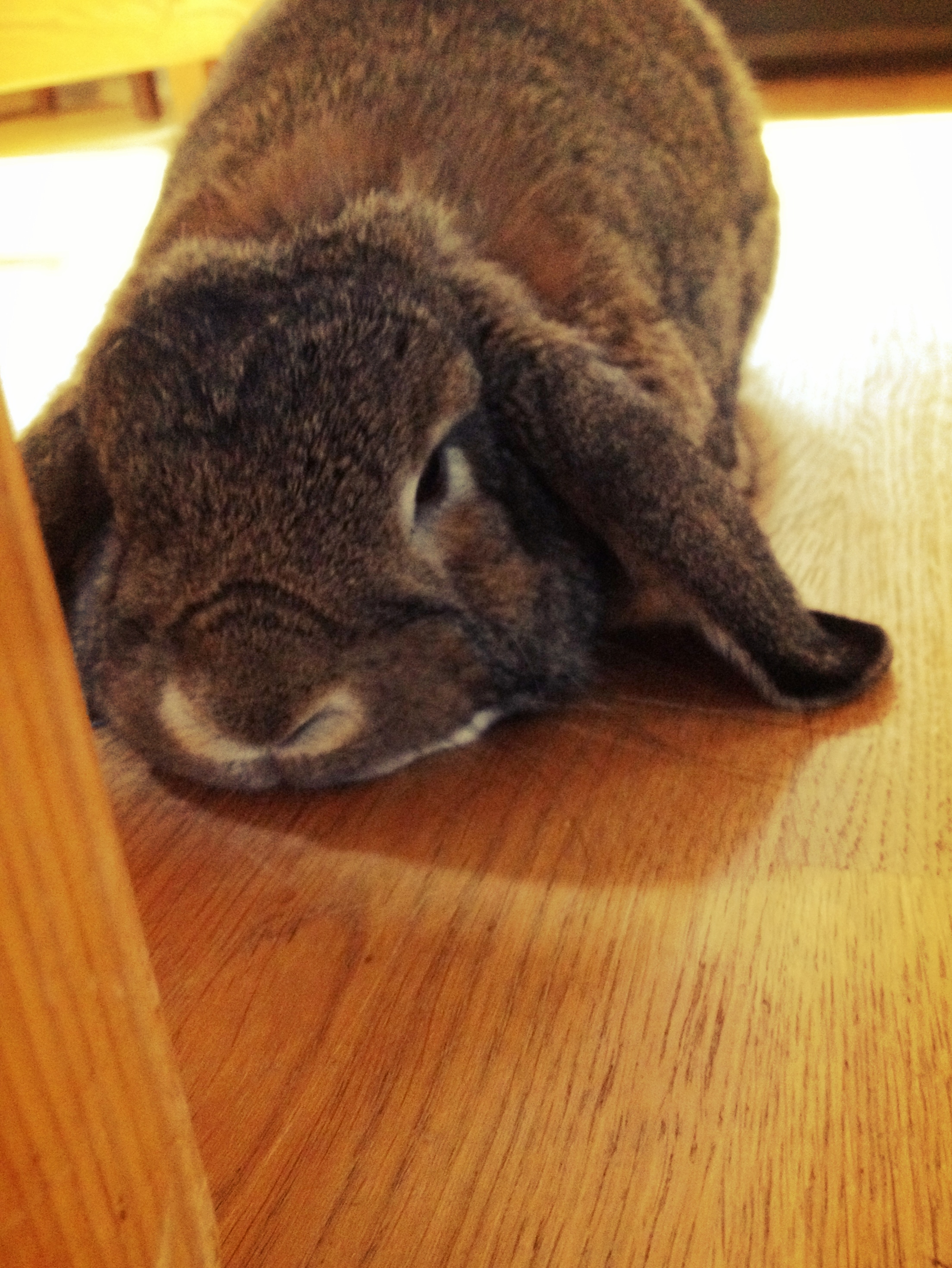 Bunny Puts Her Head Down for Petting
