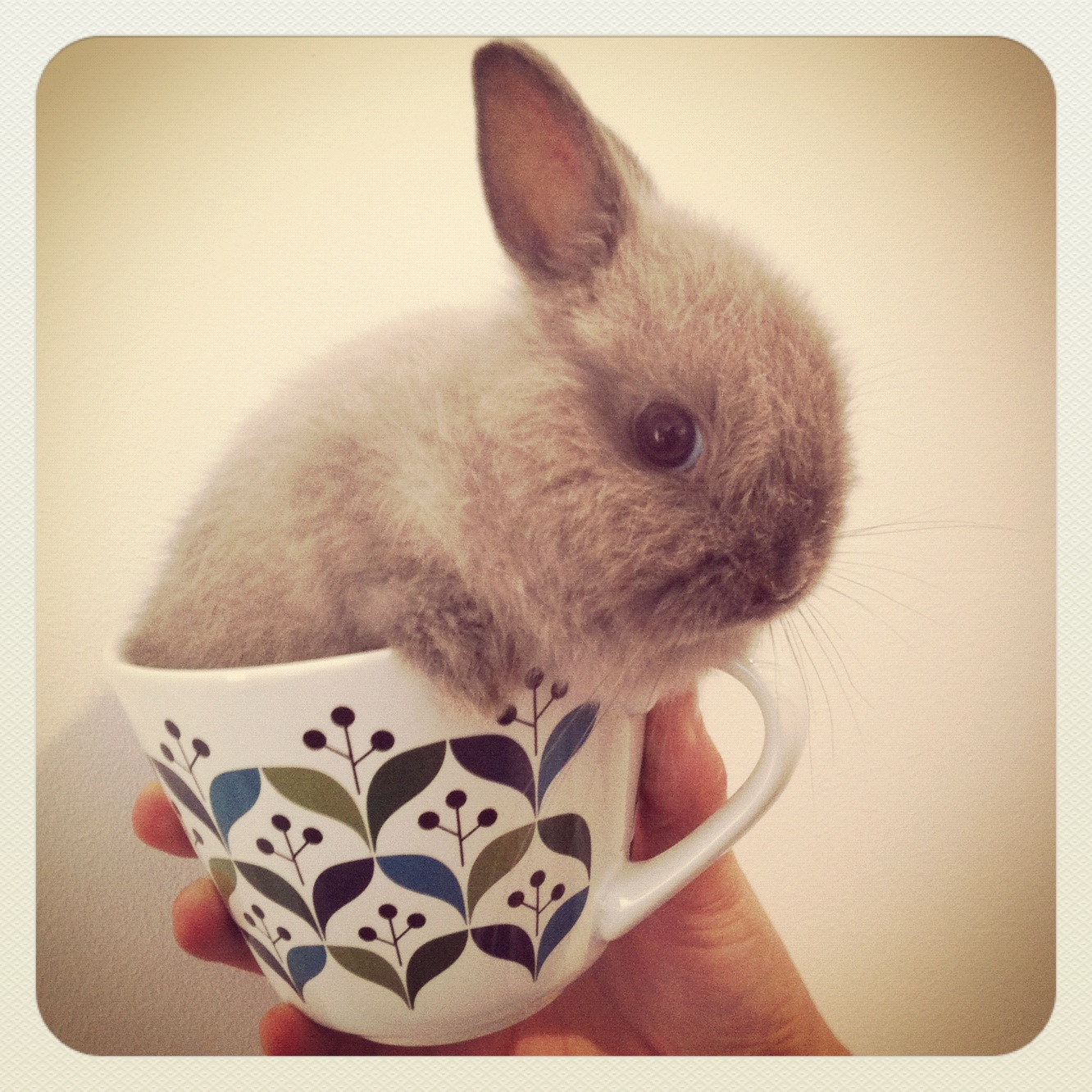 Don't Drink Me, Human! I'm Not Tea!
