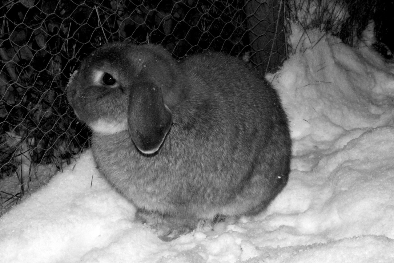 Bunnies Take a Moment from Exploring Snow to Touch Noses 2