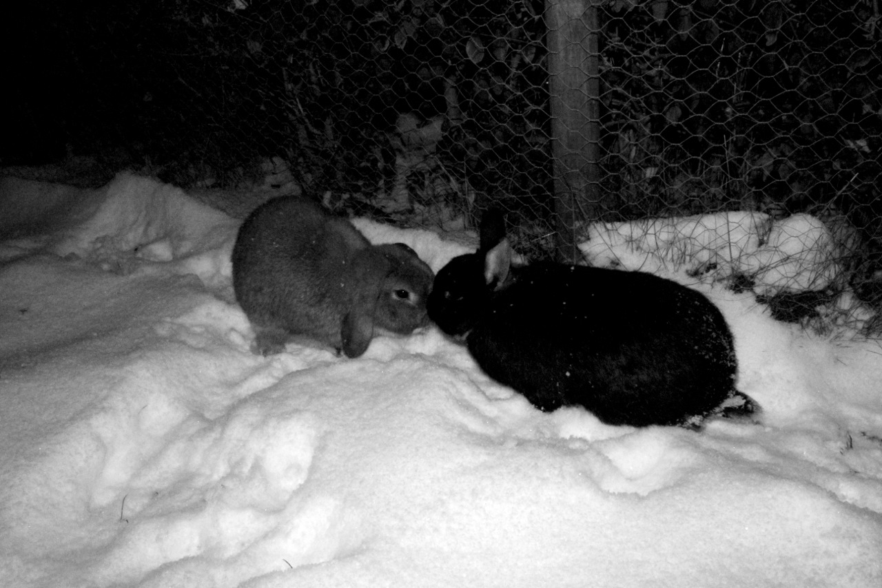 Bunnies Take a Moment from Exploring Snow to Touch Noses 1