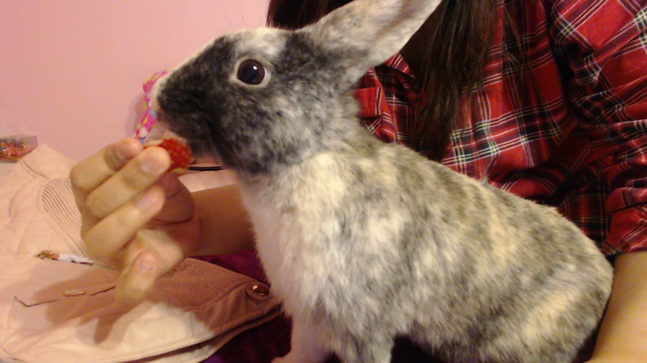 Bunny Enjoys a Strawberry Treat 1