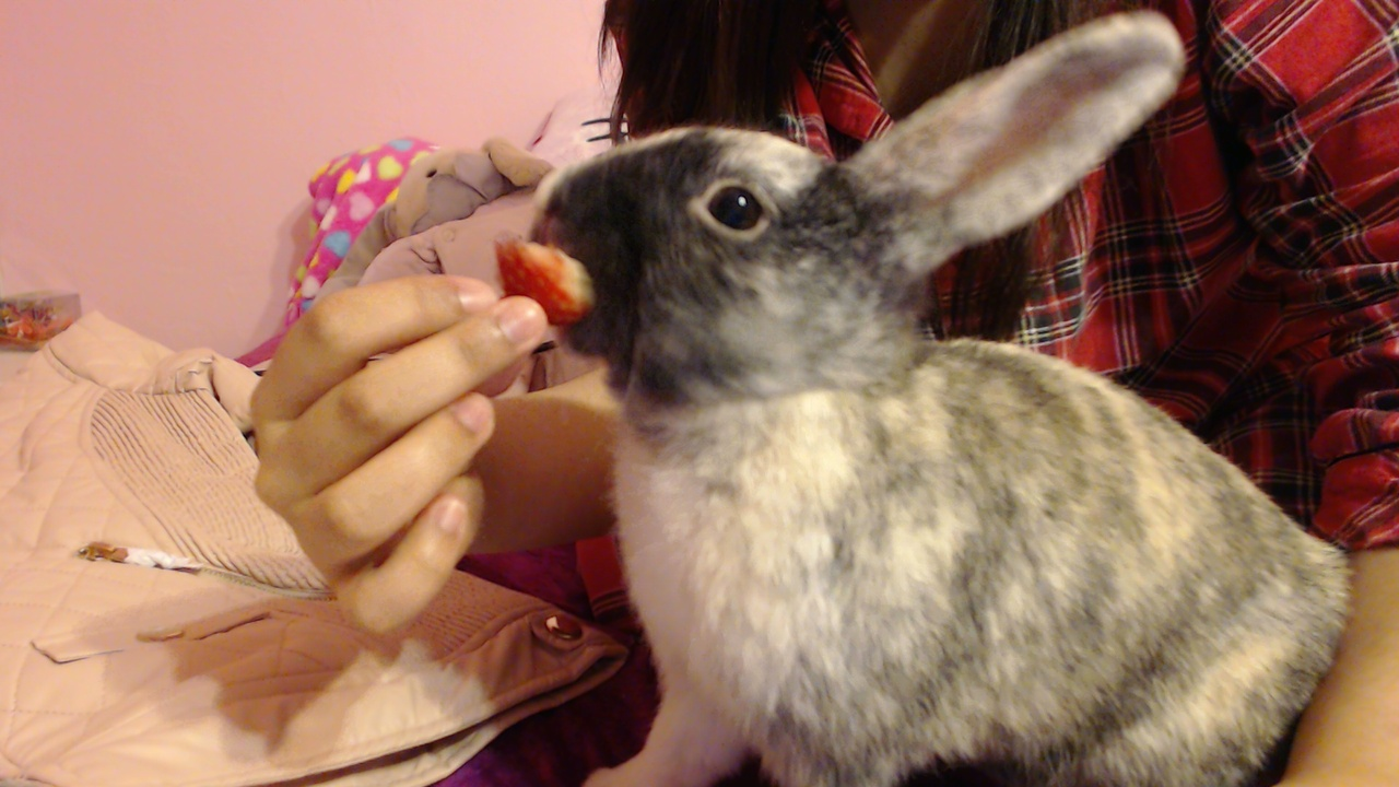 Bunny Enjoys a Strawberry Treat 4