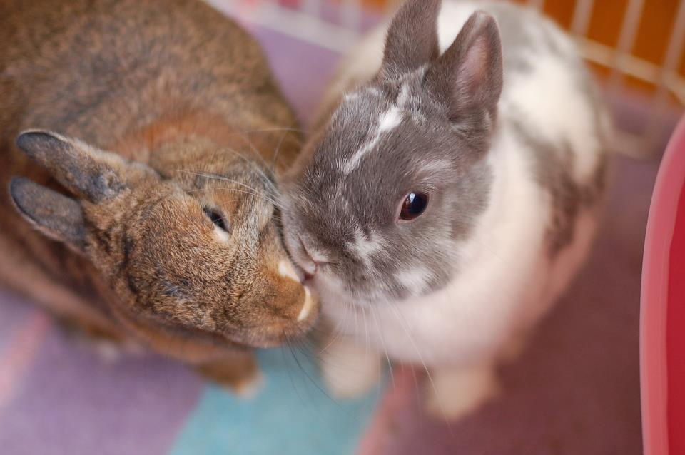 Bunnies Have a Valentine's Kiss