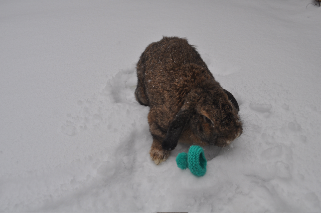 Bunny, Your Hat Fell in the Snow 2