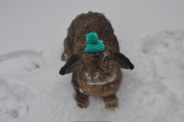 Bunny, Your Hat Fell in the Snow 1