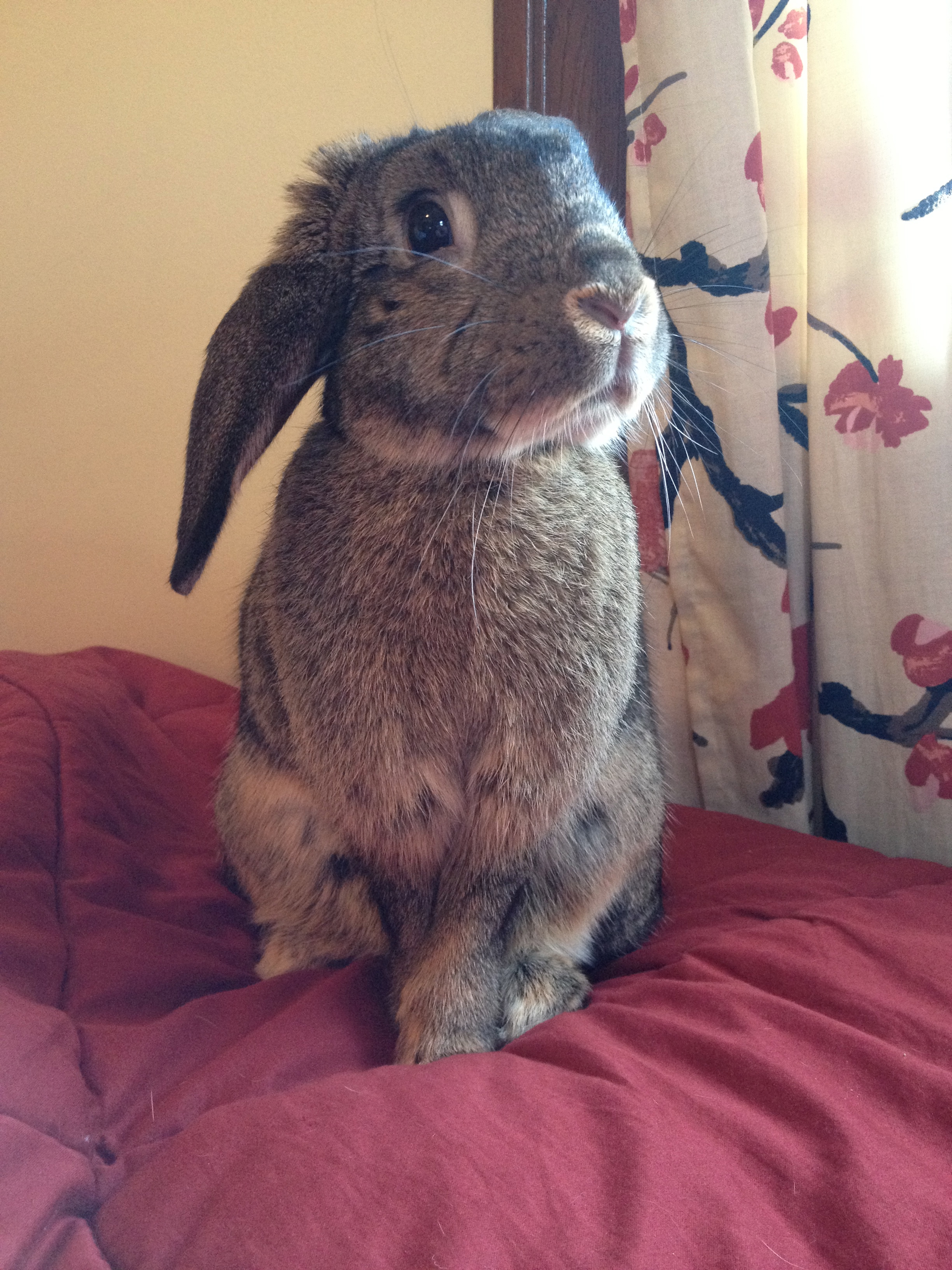 Bunny Is On Her Best Behavior - Will You Reward Her with Some Carrot?
