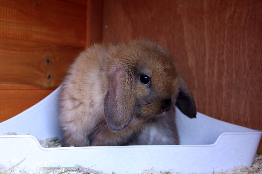 Bashful Bunny Is Shy About Litterbox Photos