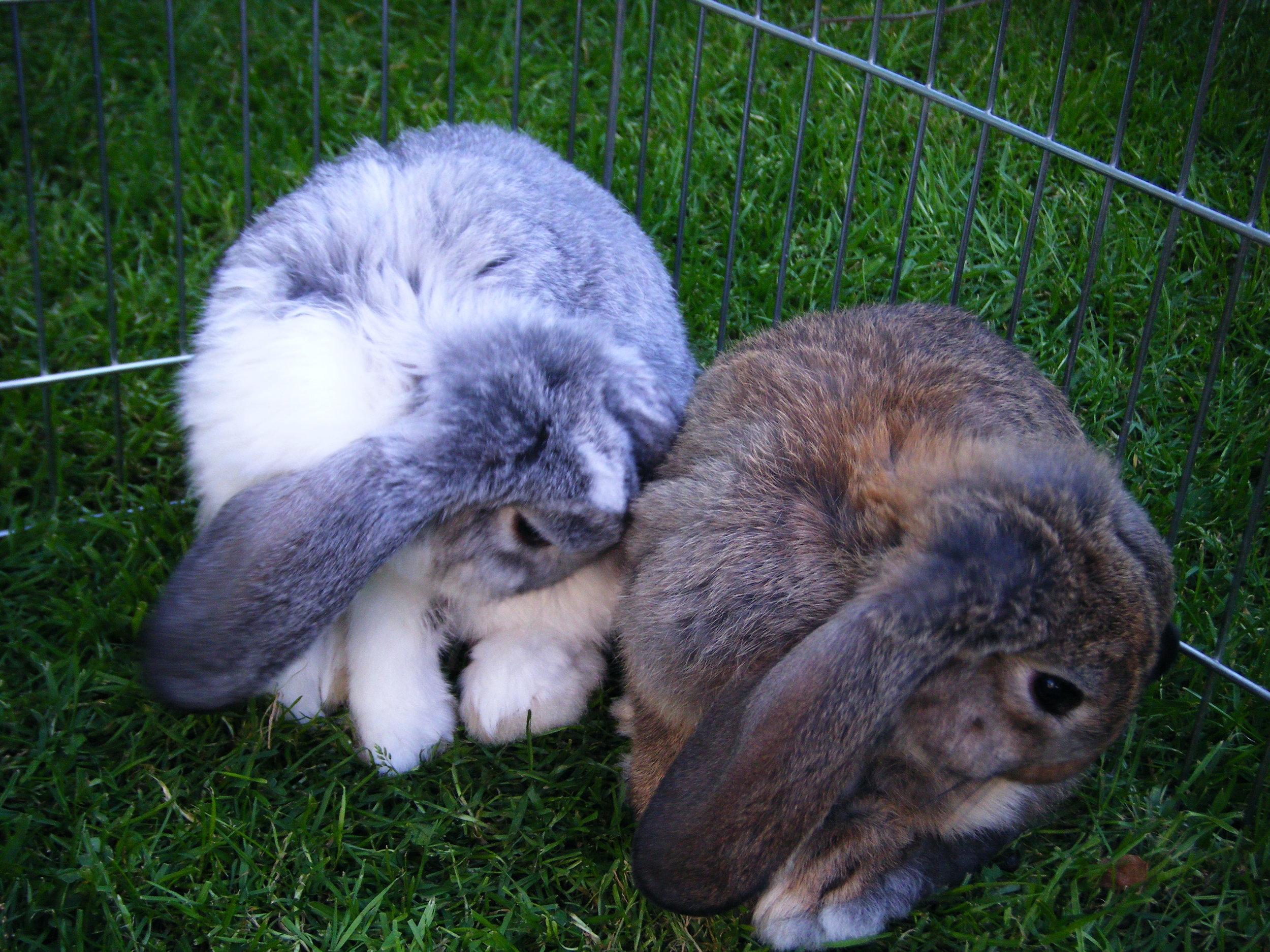 Synchronized Bunnies