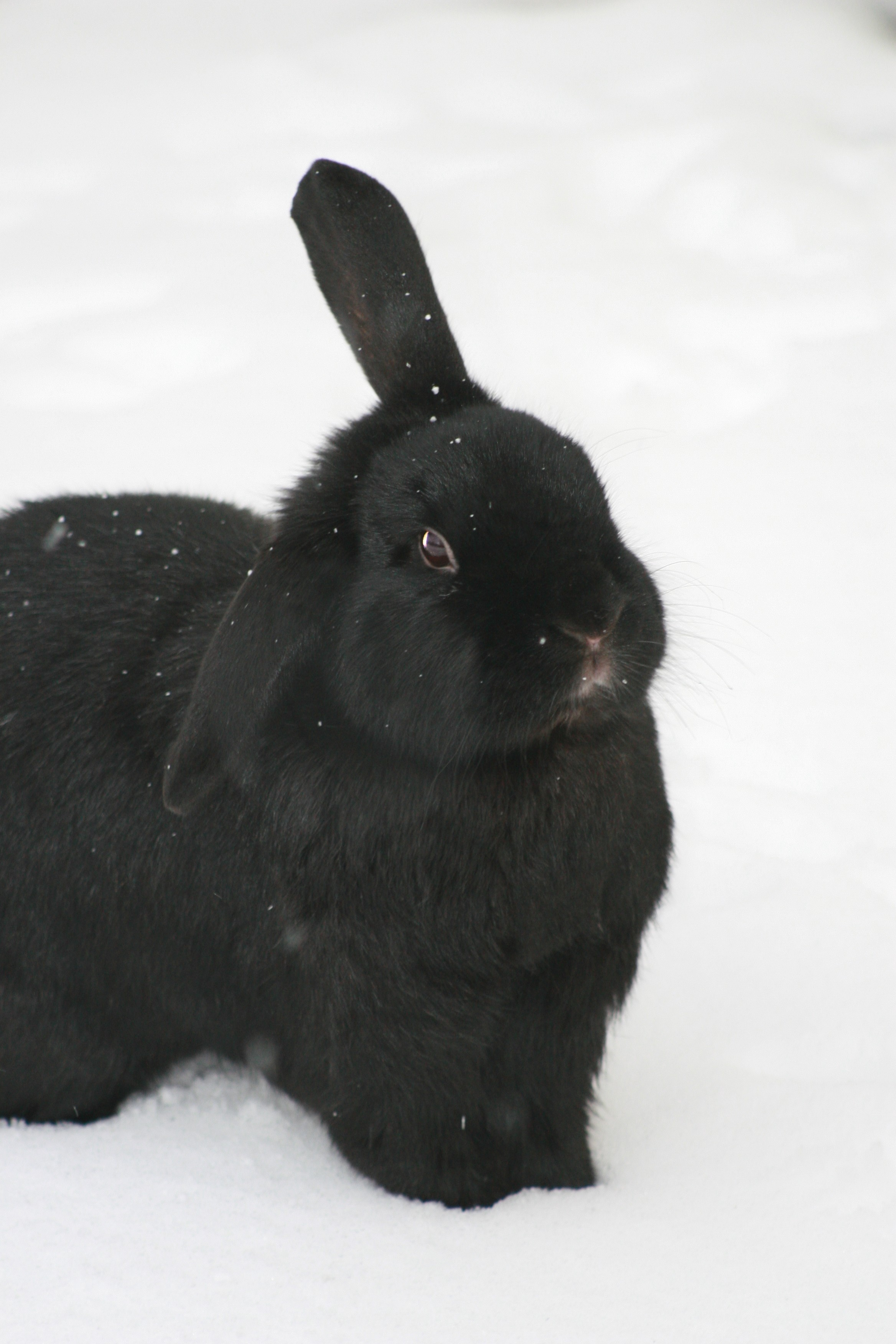 Snowflakes Show Up on This Bunny's Fur