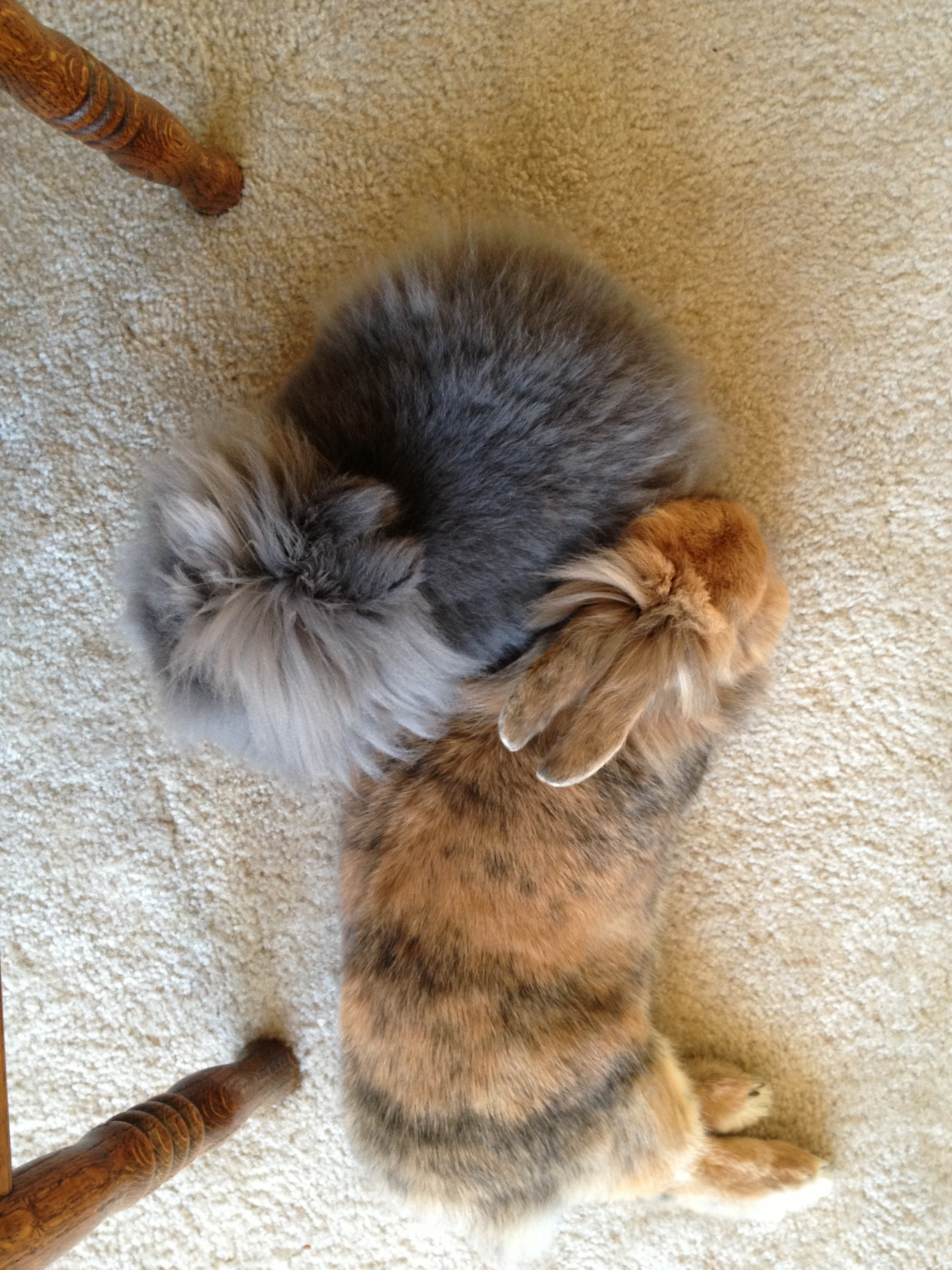 An Aerial View of Bunny Snuggles