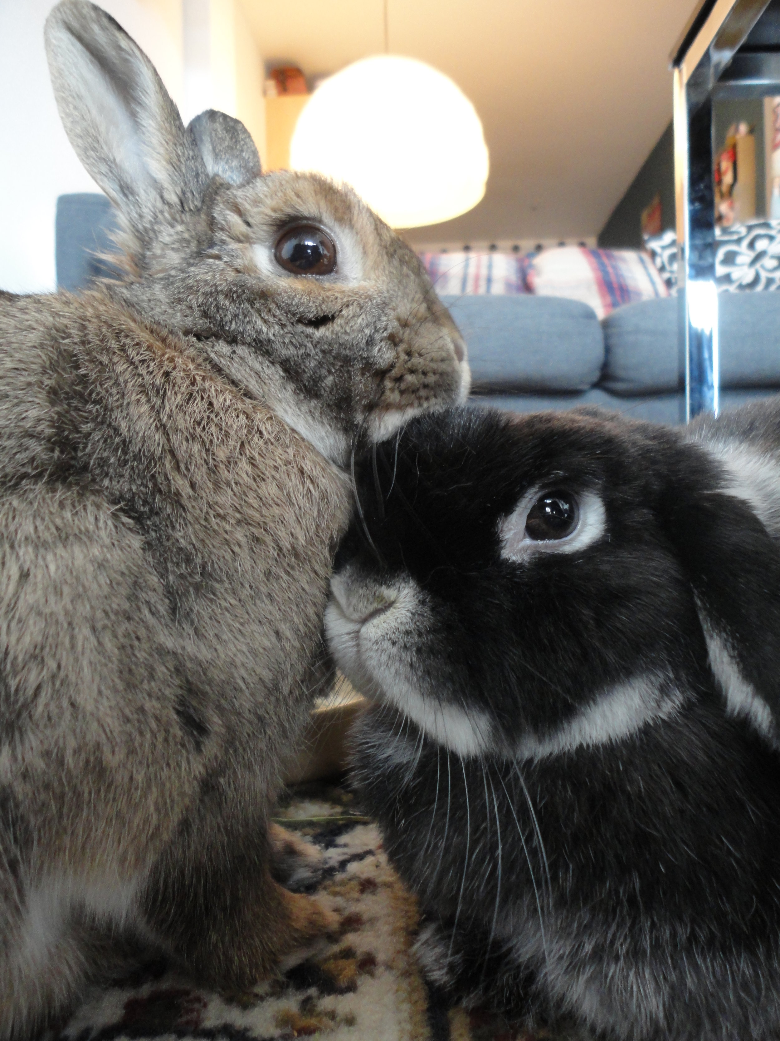 Bunnies' Subtle Display of Affection