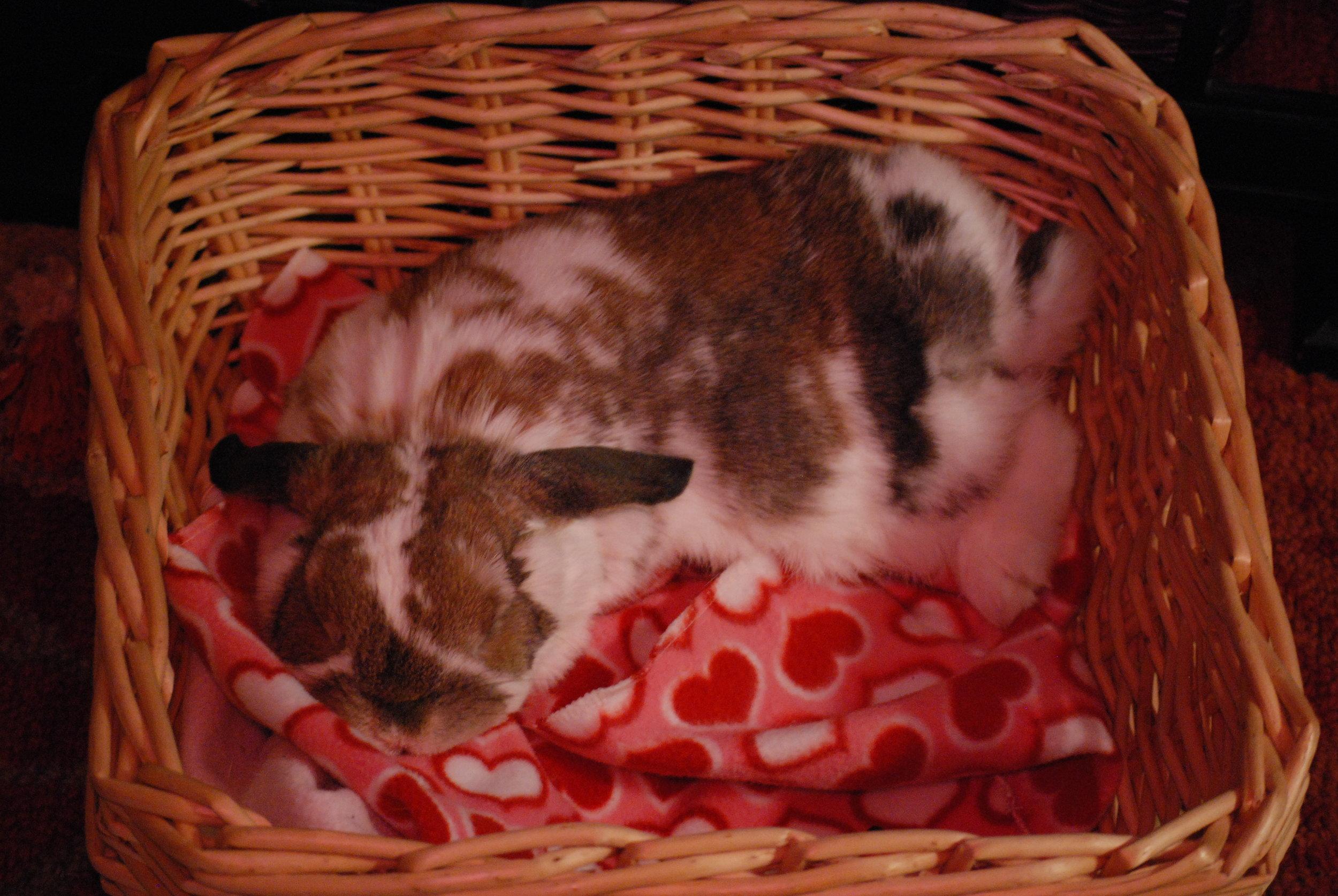 Bunny Sleeps in Her Cozy Basket