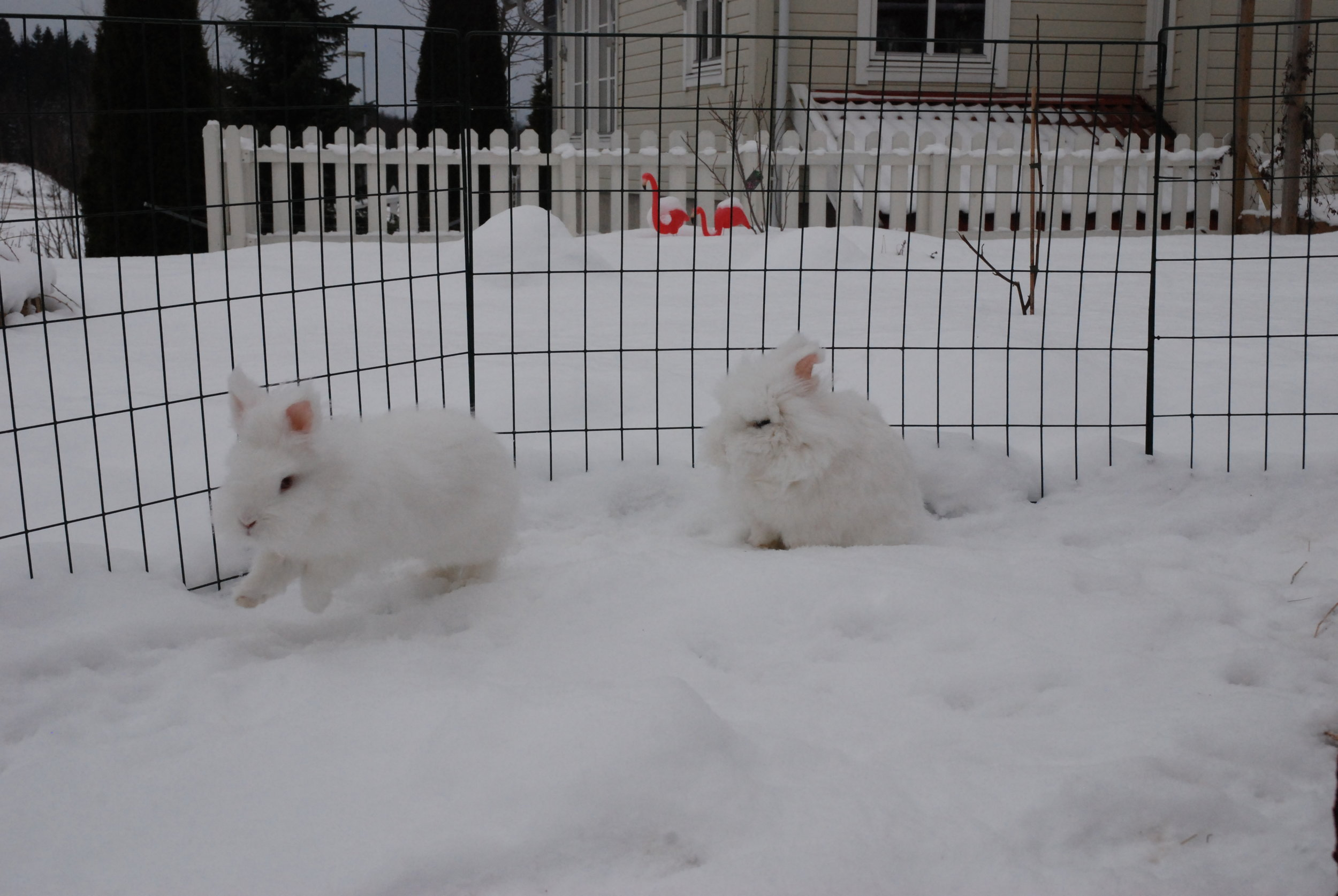 Where Does the Snow End and the Bunny Begin? 1