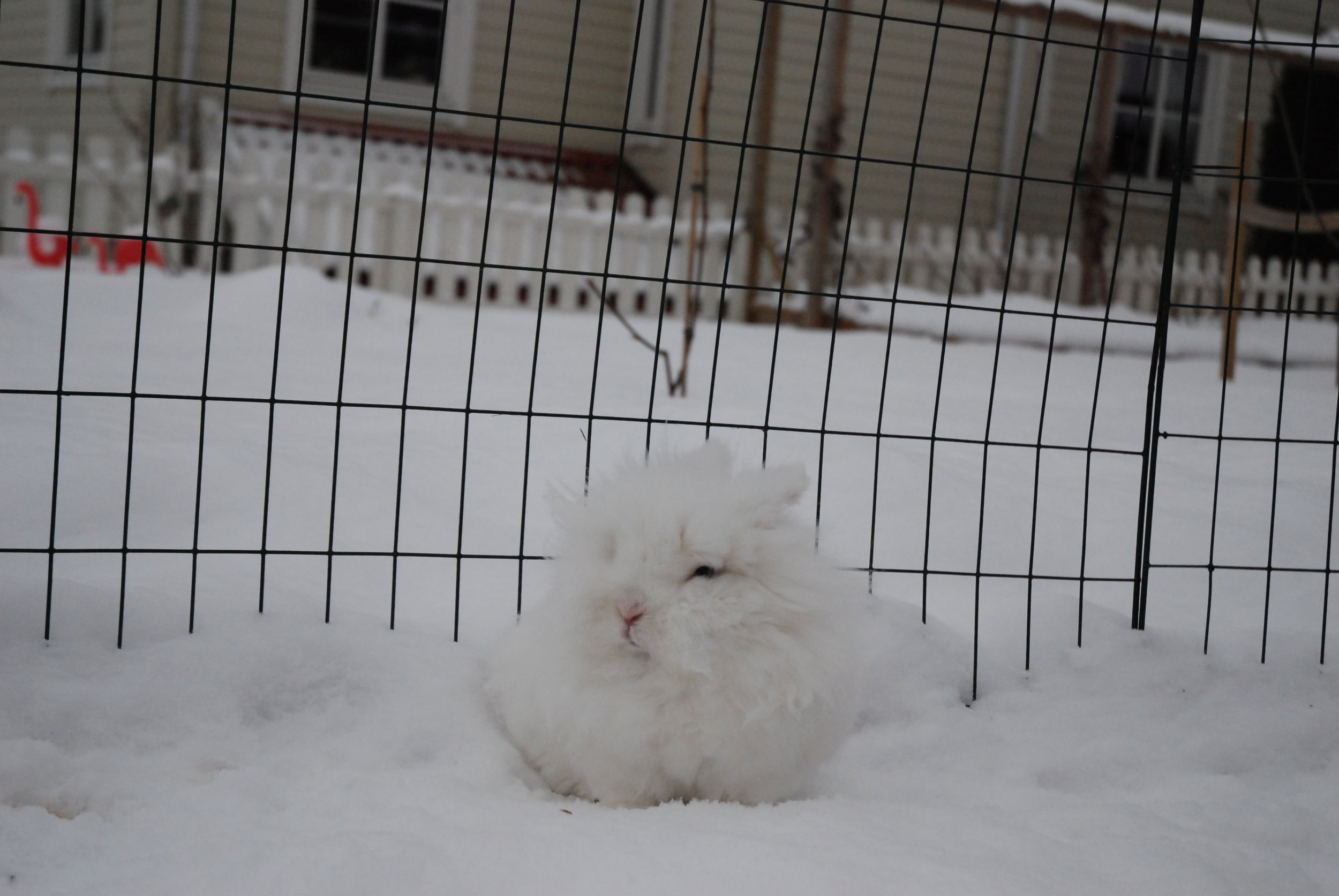 Where Does the Snow End and the Bunny Begin? 2