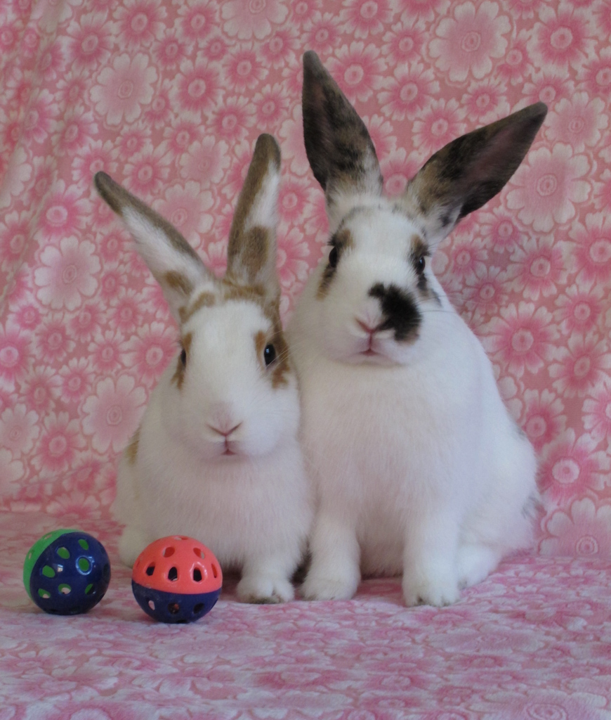 Bunnies Pose for a Couple's Portrait