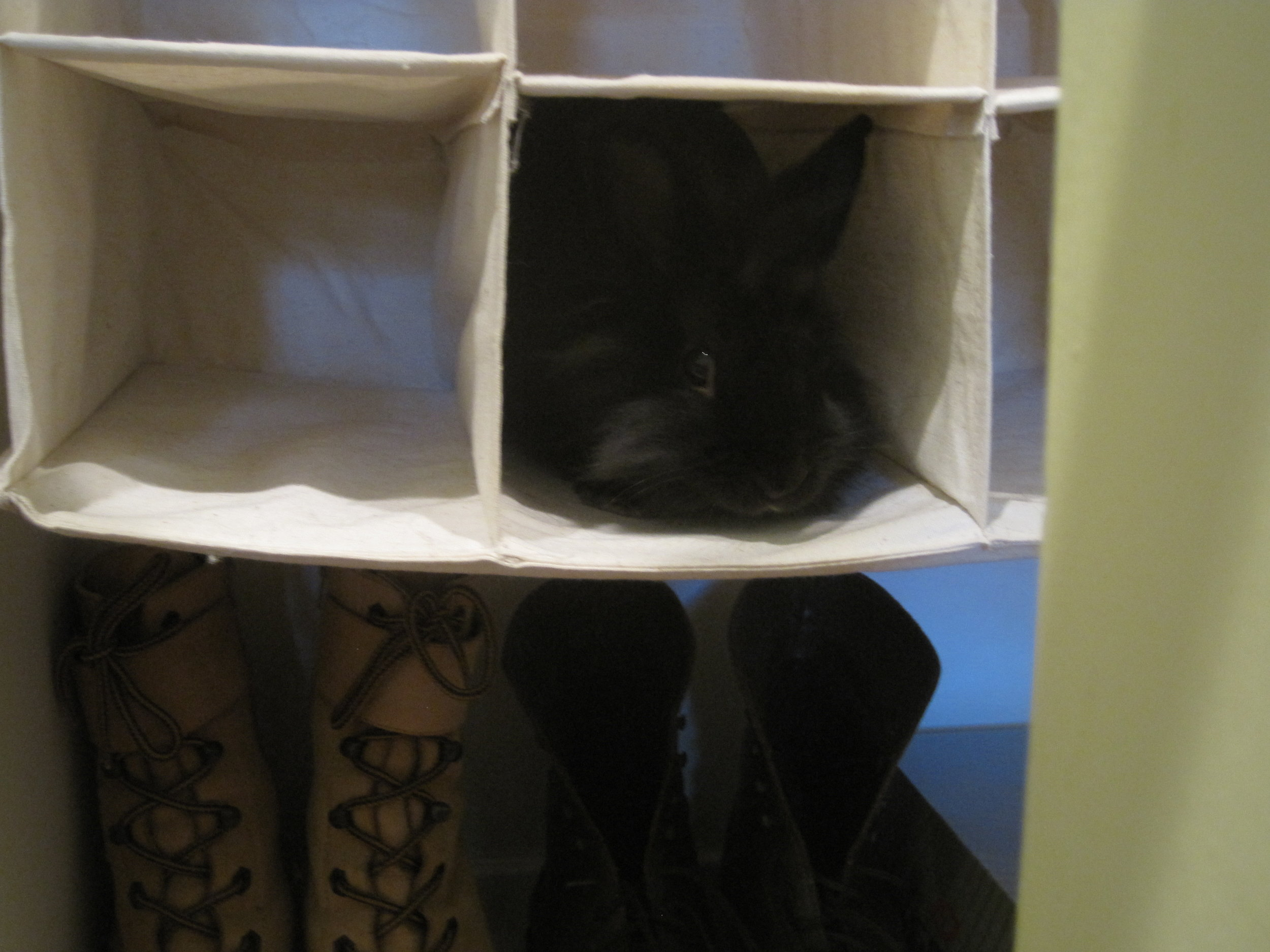 Bunny Found the Perfect Bunny-Sized Hidey-Hole