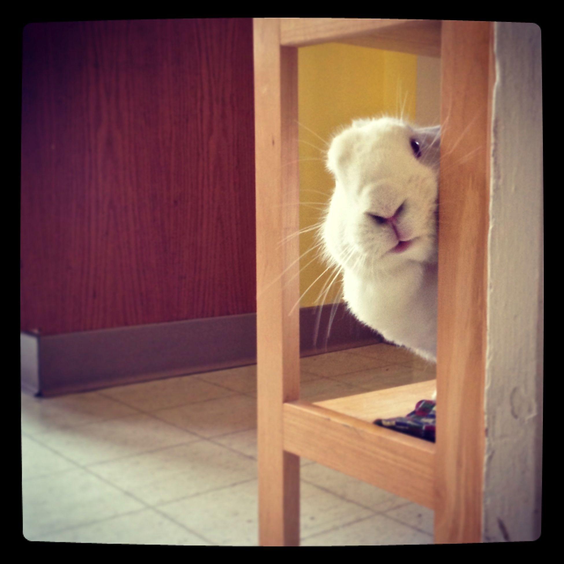 Bunny Pokes His Head Around the Corner to Say Hi