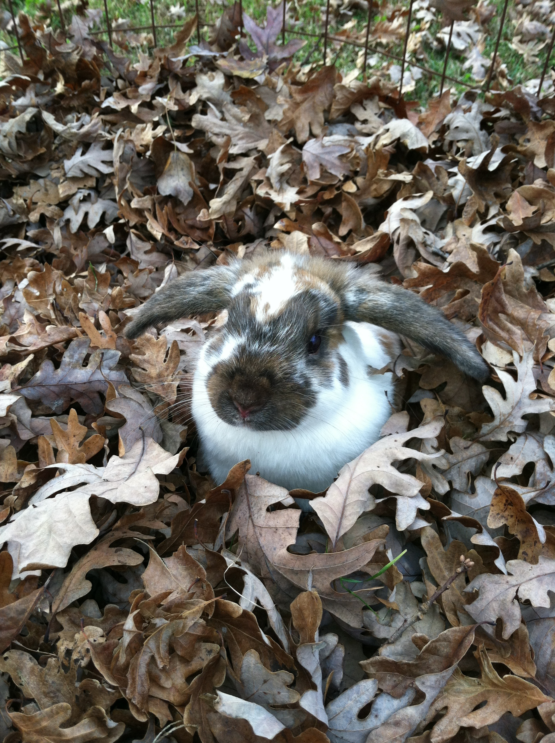Bunny Plays in a Pile of Crunchy Leaves