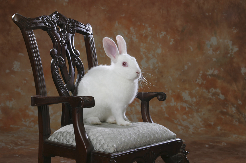 Bunny Sits for a Very Formal Portrait