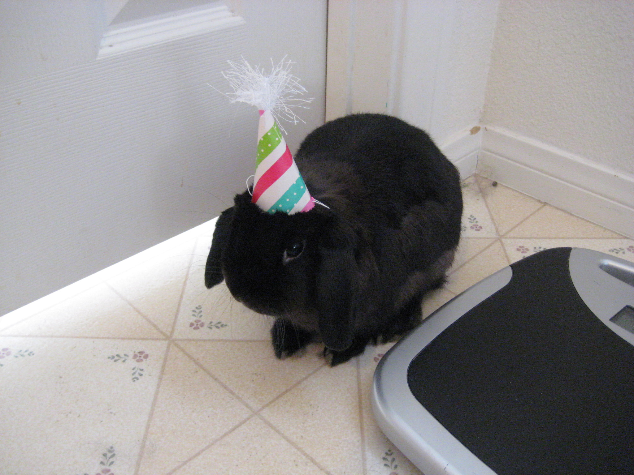 Shy Bunny Hides from Guests at His Own Birthday Party