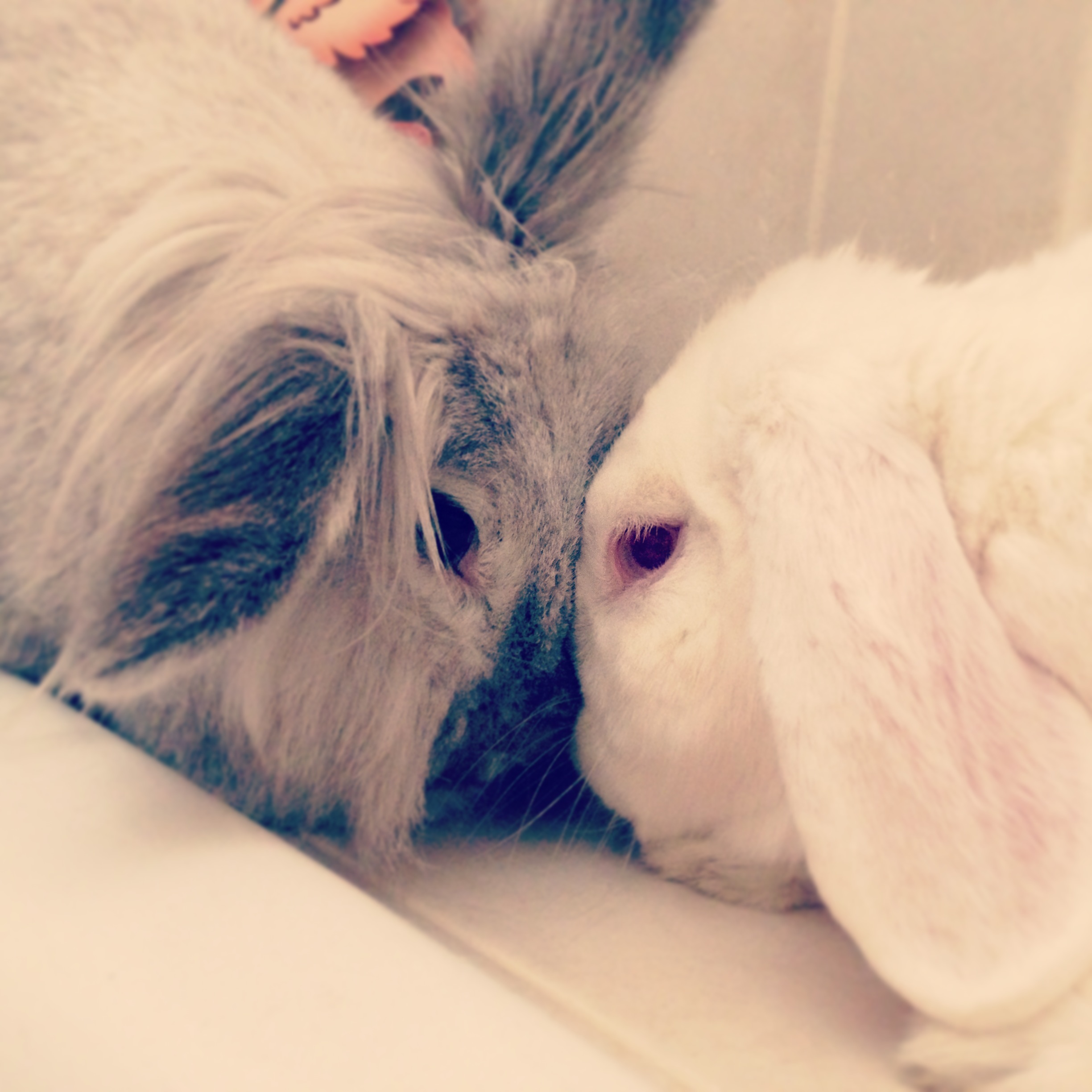 Bunnies Share a Sweet Moment with a Head Nuzzle