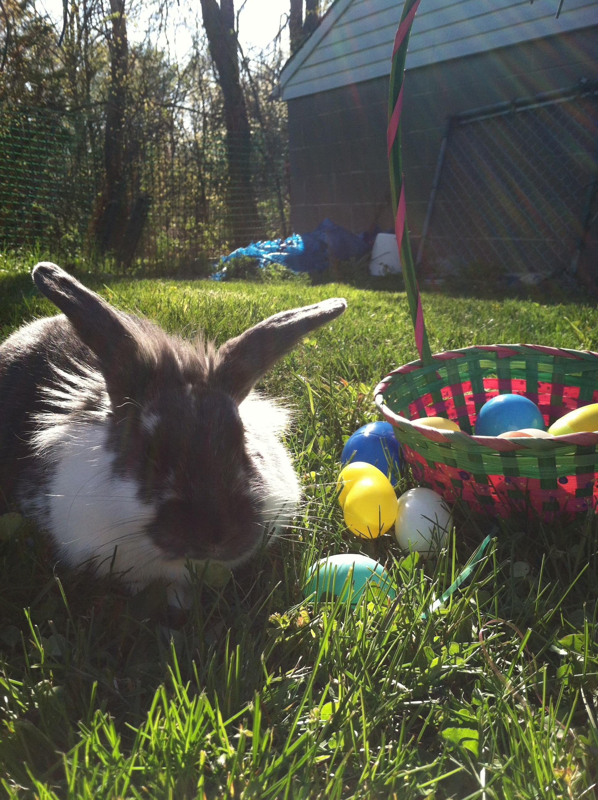 Bunny Is the Winner of the Easter Egg Hunt