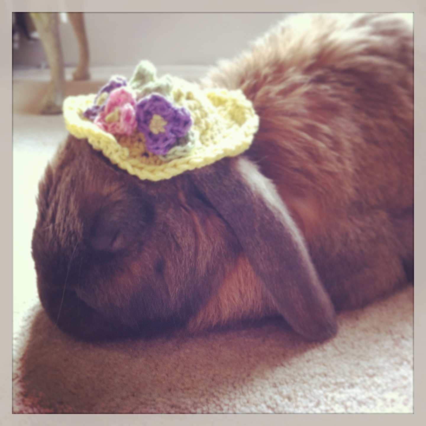 Bunny Falls Asleep in His Easter Hat After a Long Day