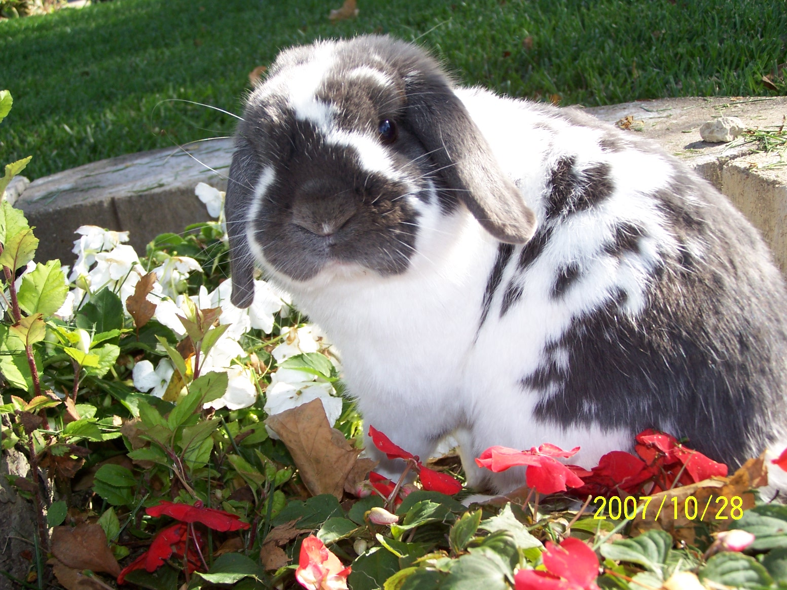 Bunny Has a Photoshoot in the Flowerbed 2