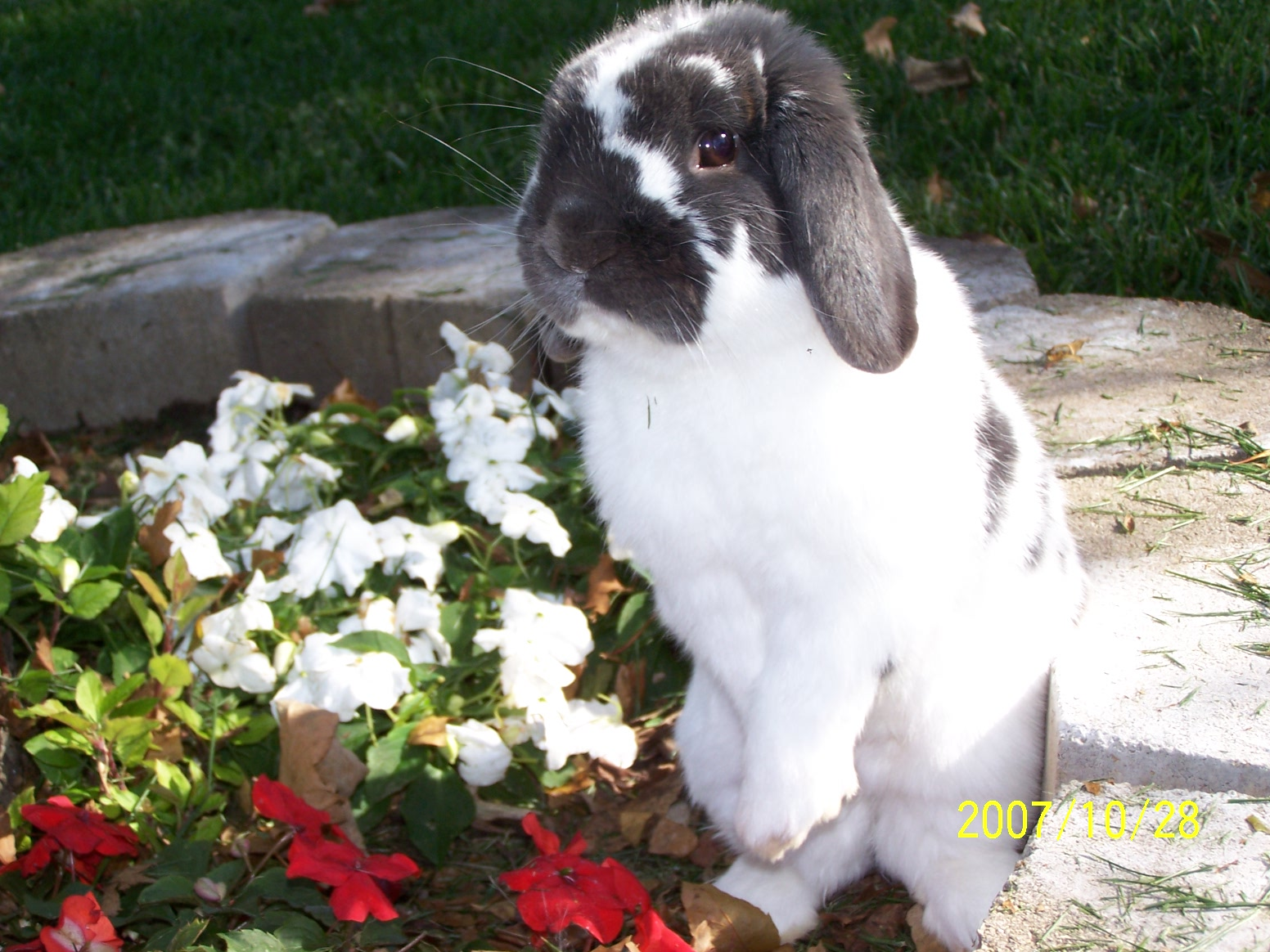 Bunny Has a Photoshoot in the Flowerbed 1