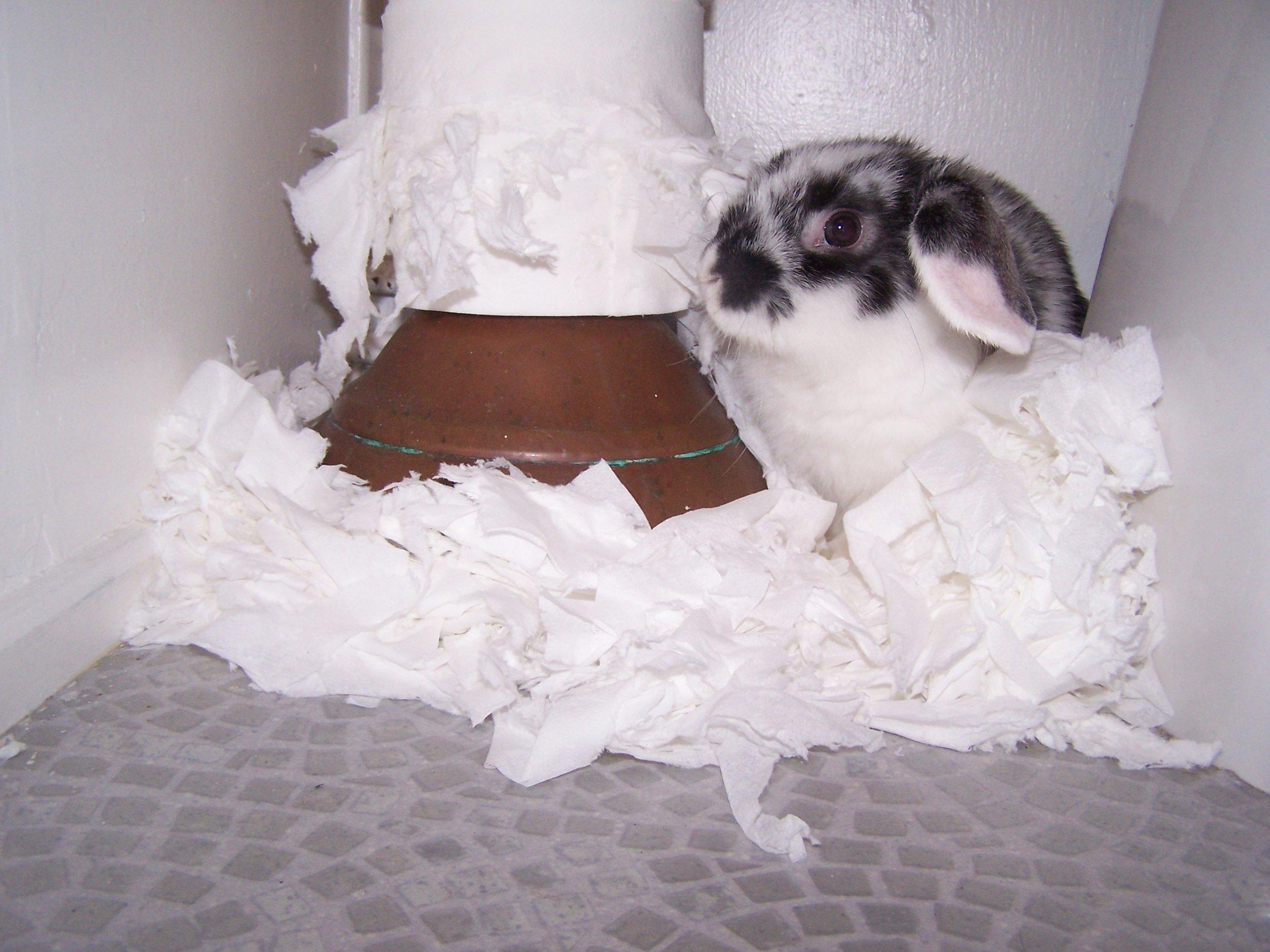 Bunny Is Caught Mid-Mischief!