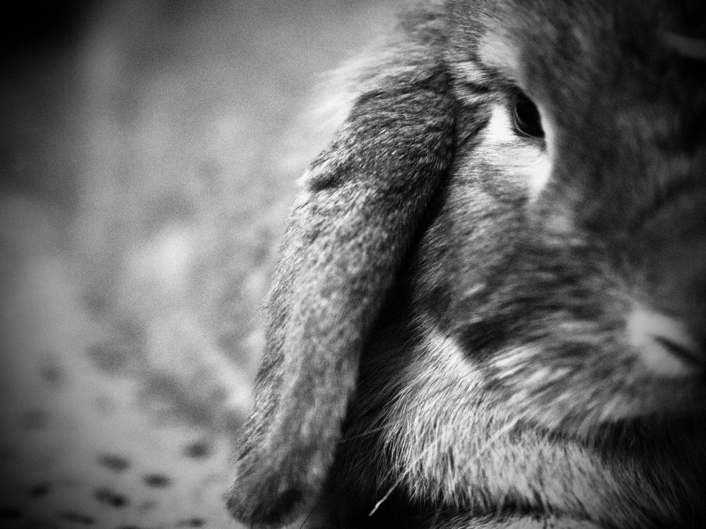 Closeup Shot Shows the Texture of Bunny's Fur