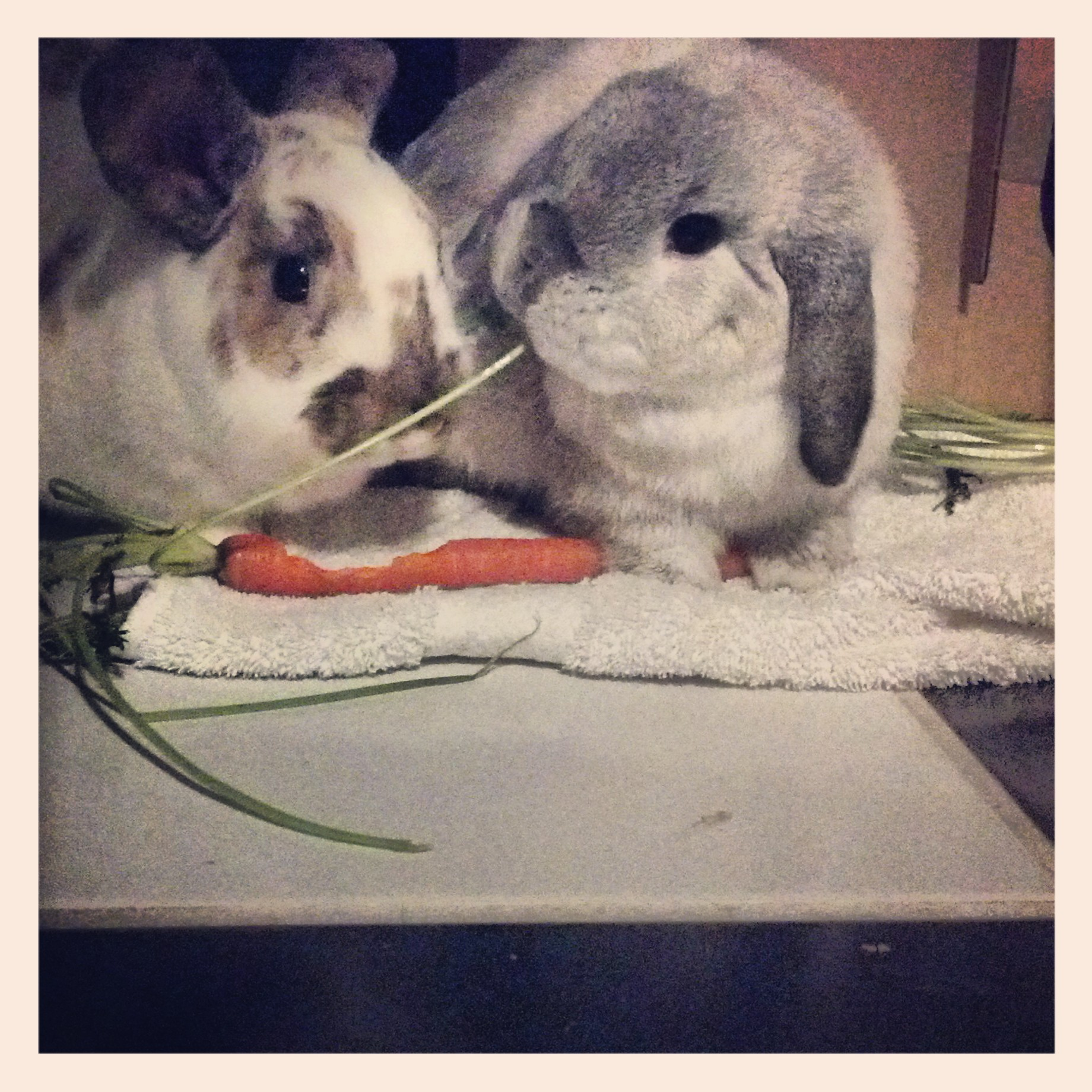 Bunnies Are About to Have a Lady and the Tramp Moment