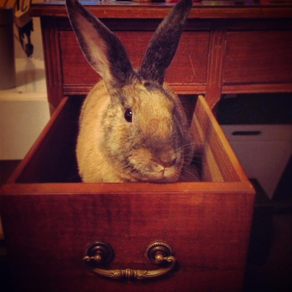 Hey, the Vegetables Aren't in This Drawer!