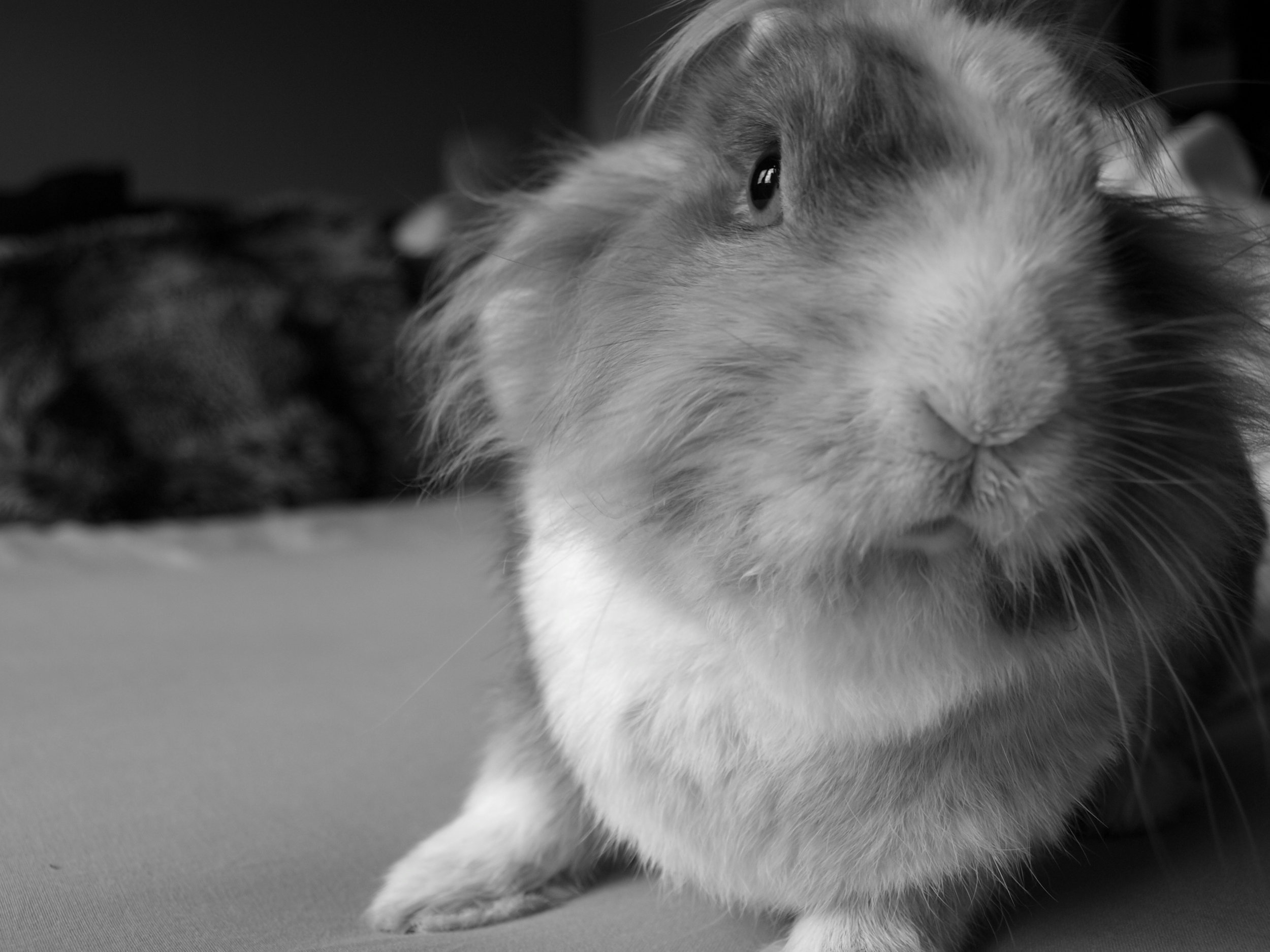 A Triptych of Bunny Portraits 1