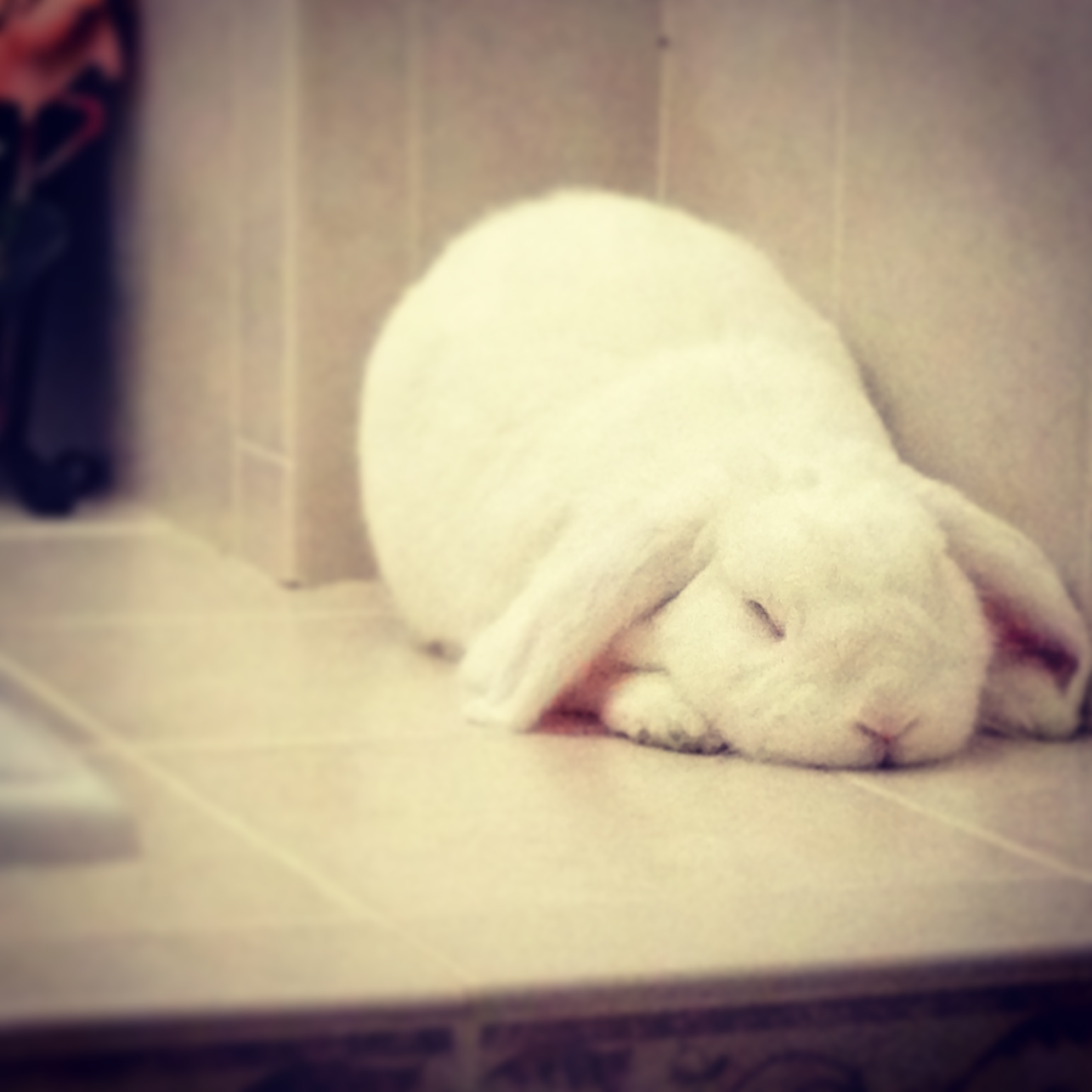 Bunny Found a Quiet Corner for a Peaceful Nap