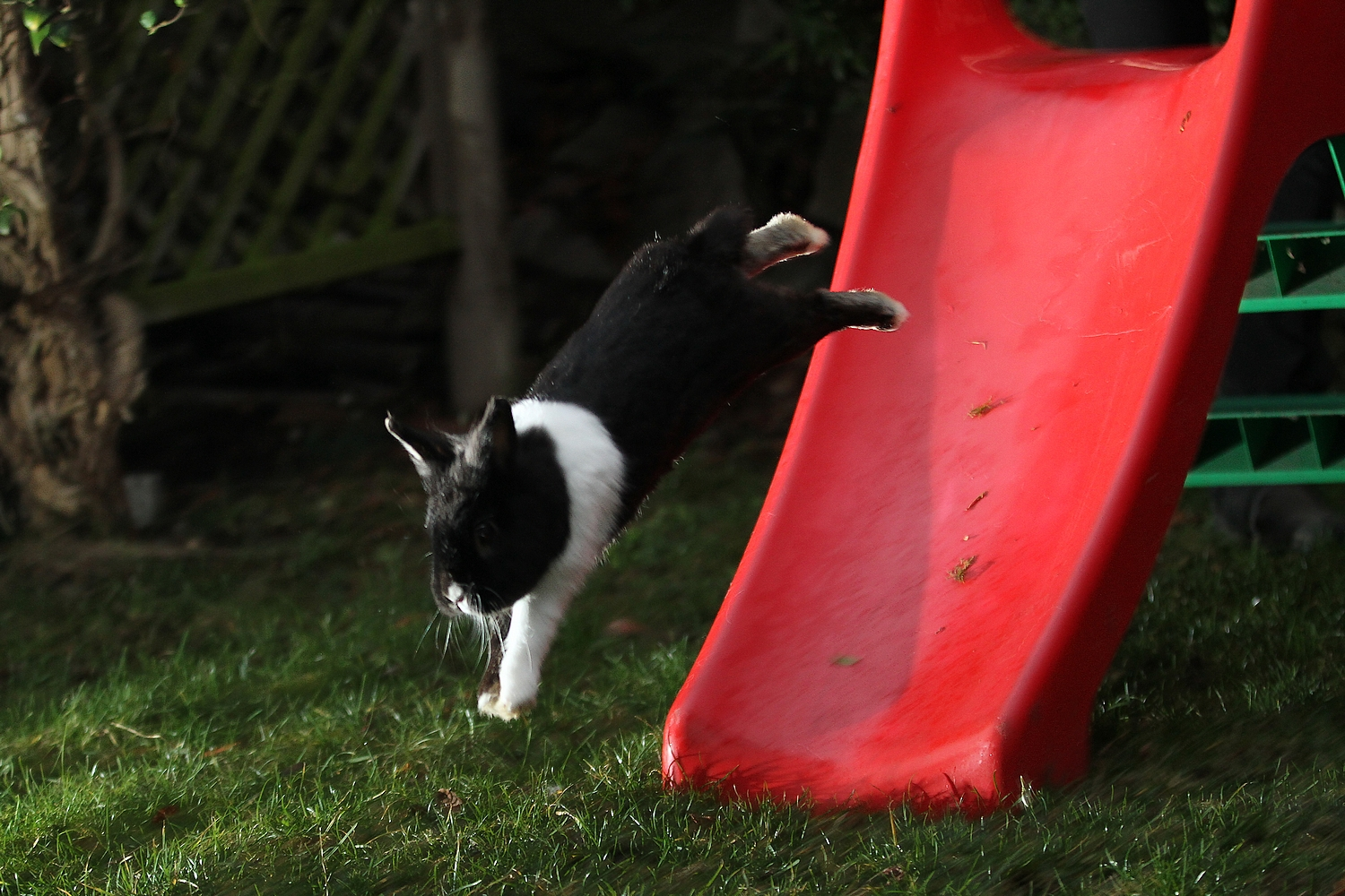 Bunny Takes a Flying Leap Off the Slide