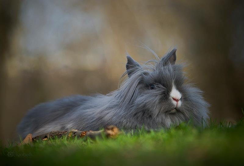 Bunny Rests in the Grass and Enjoys the Breeze in Her Fur