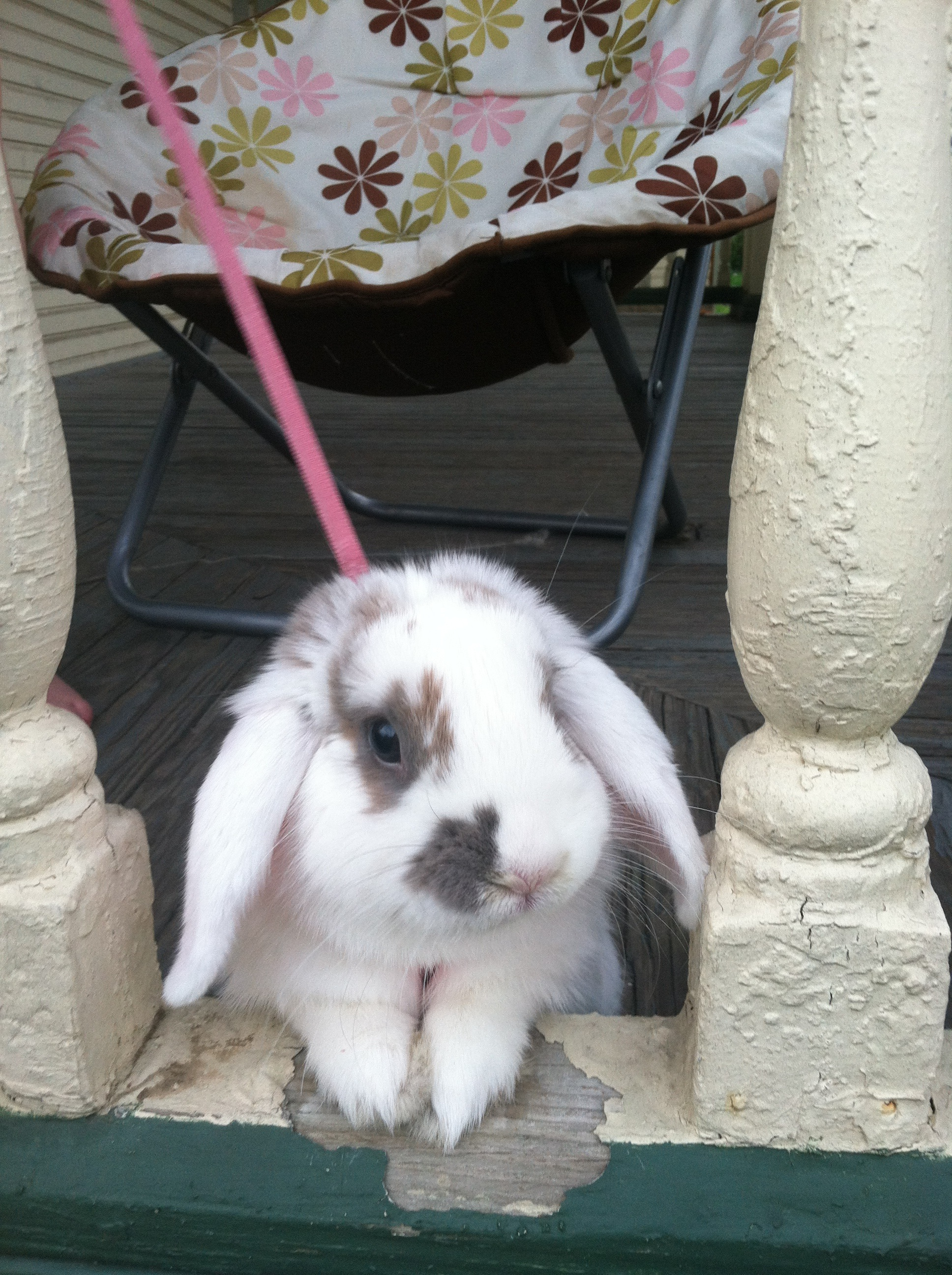 Bunny Looks Out at the Big, Wide World from Her Porch