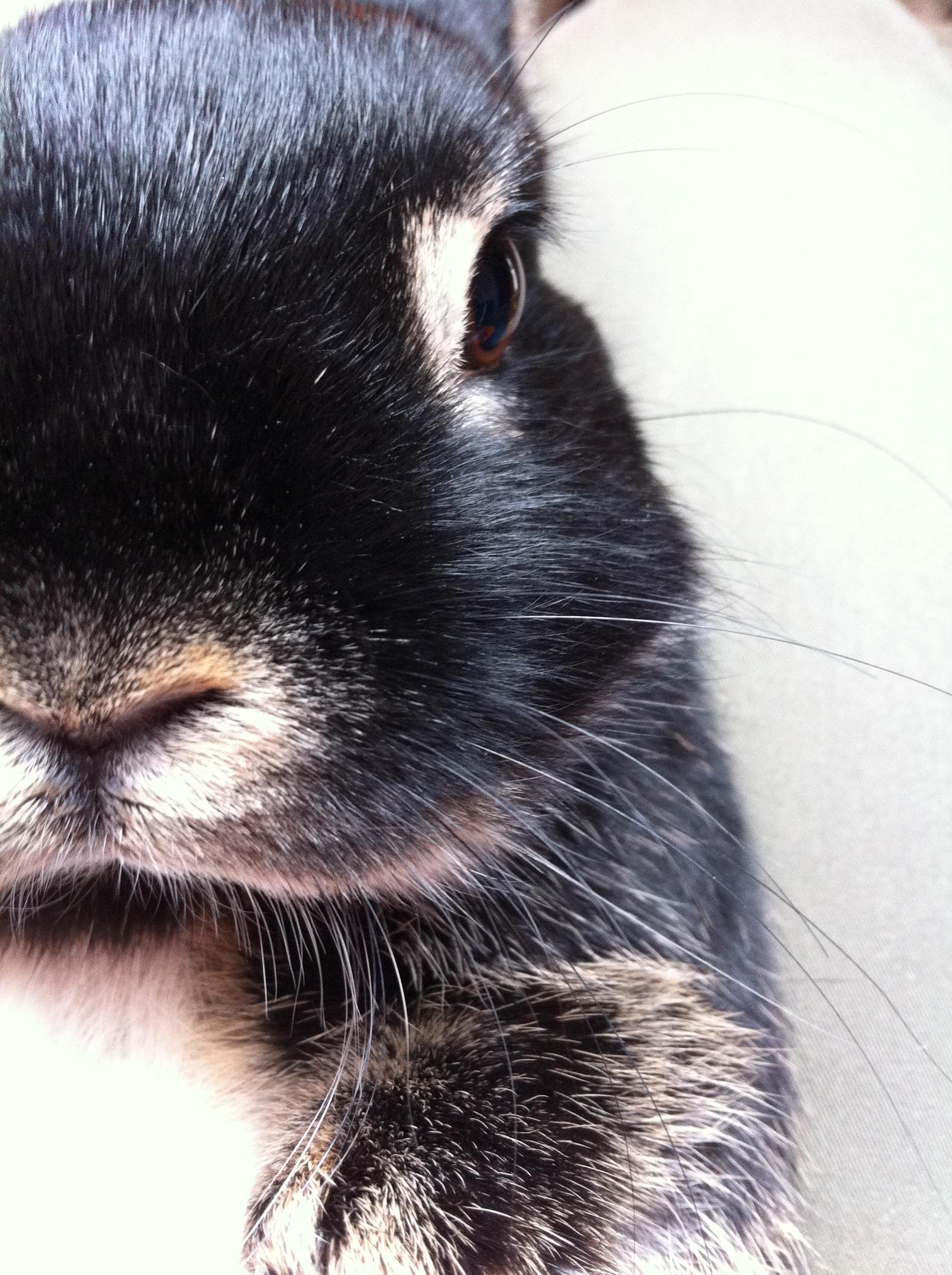 Bunny's Close-Up Portrait