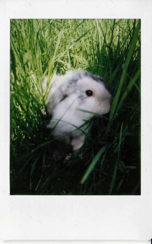 Explorer Bunny Combs through the Grass and Finds a Tasty Dandelion 1