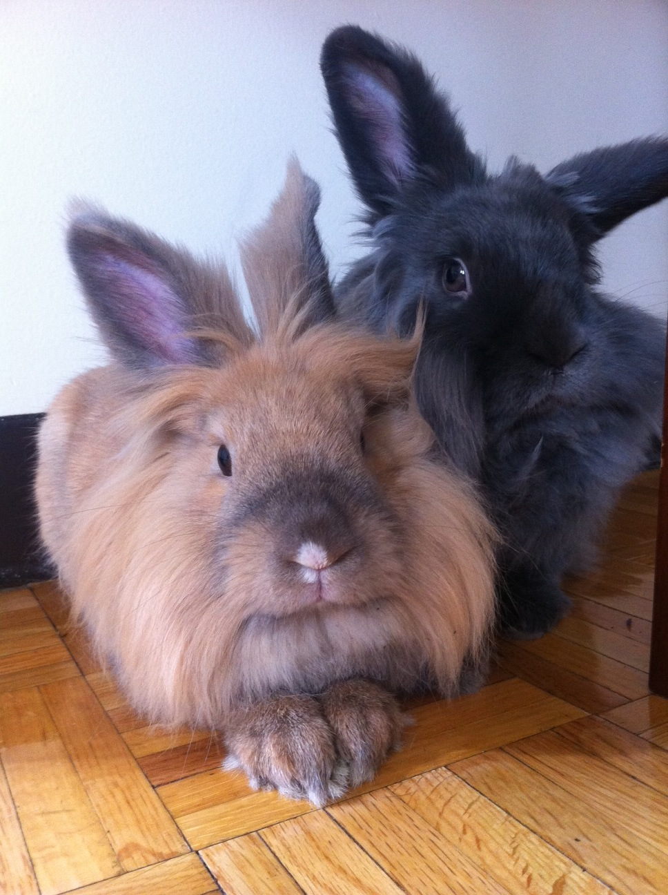 Best Friend Bunnies Live Separately But Spend Their Vacations Together