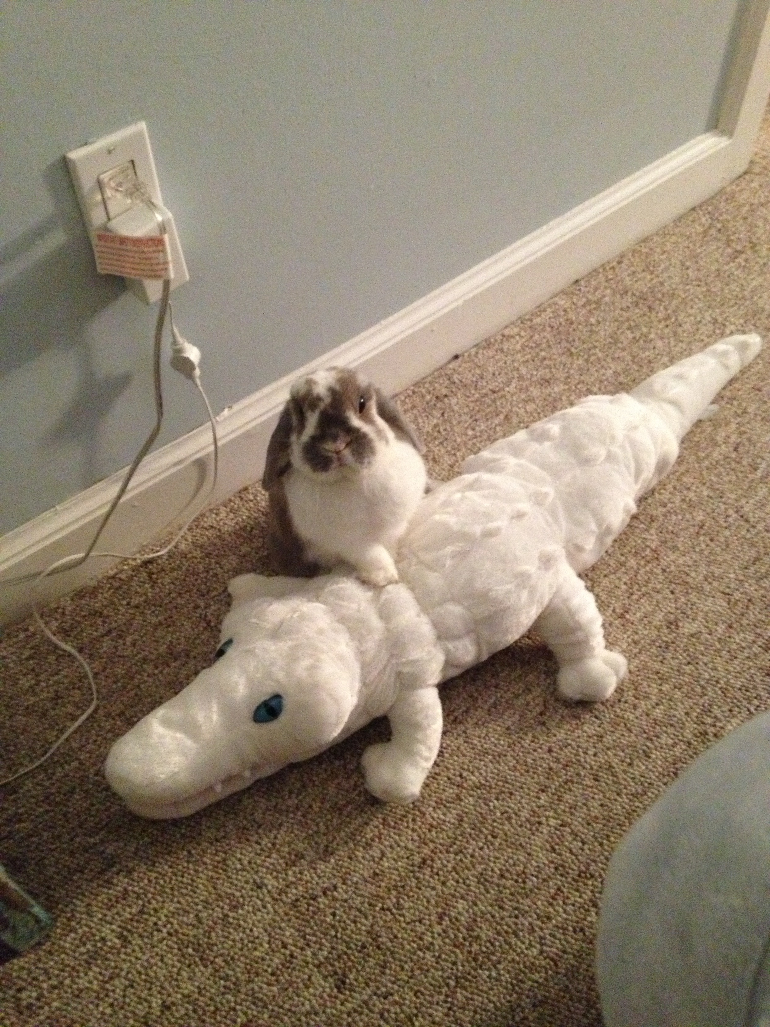Crocodile Hunter Bunny Has Subdued a Great White Croc!