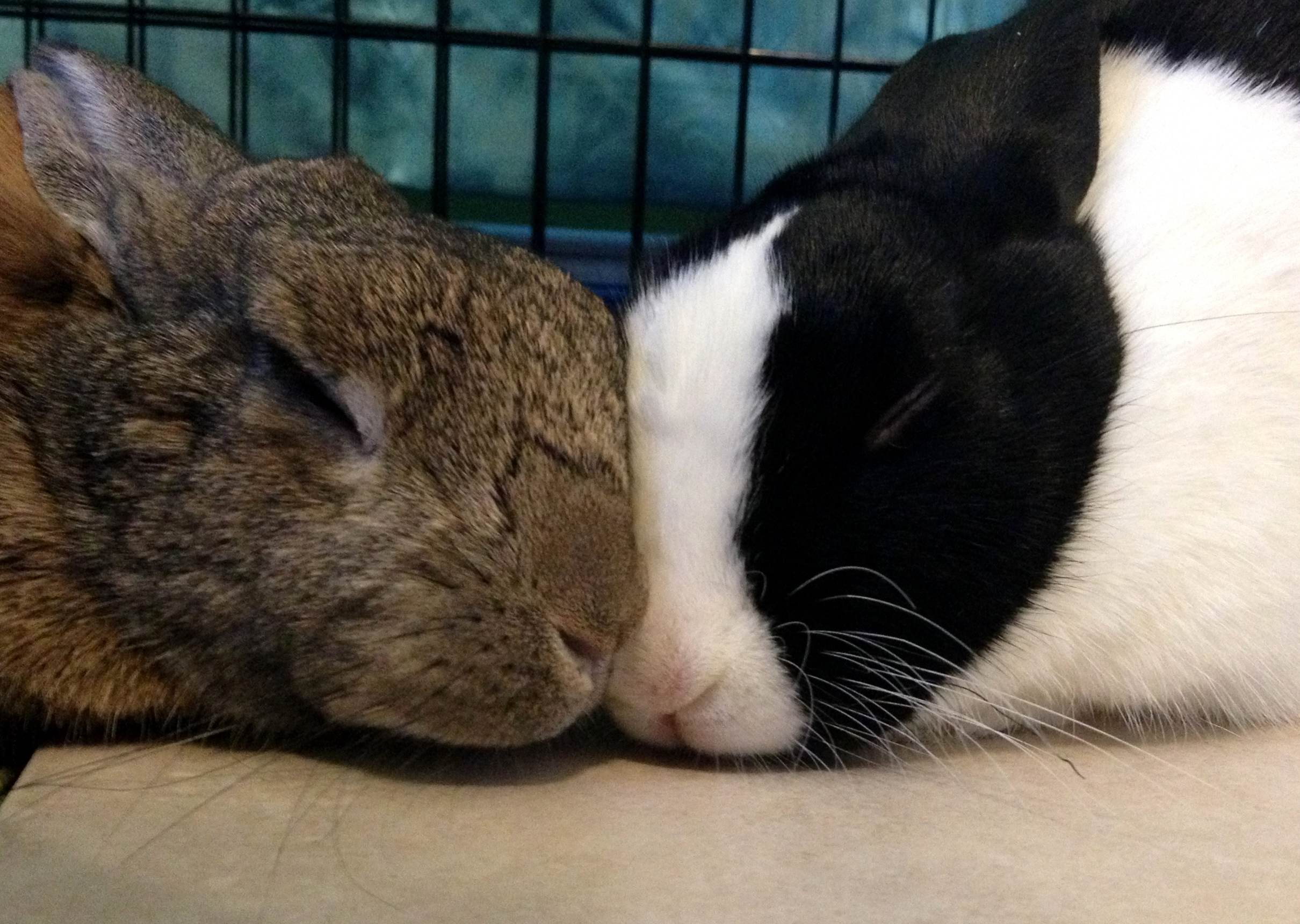 Bunnies Have a Sweet Snuggle