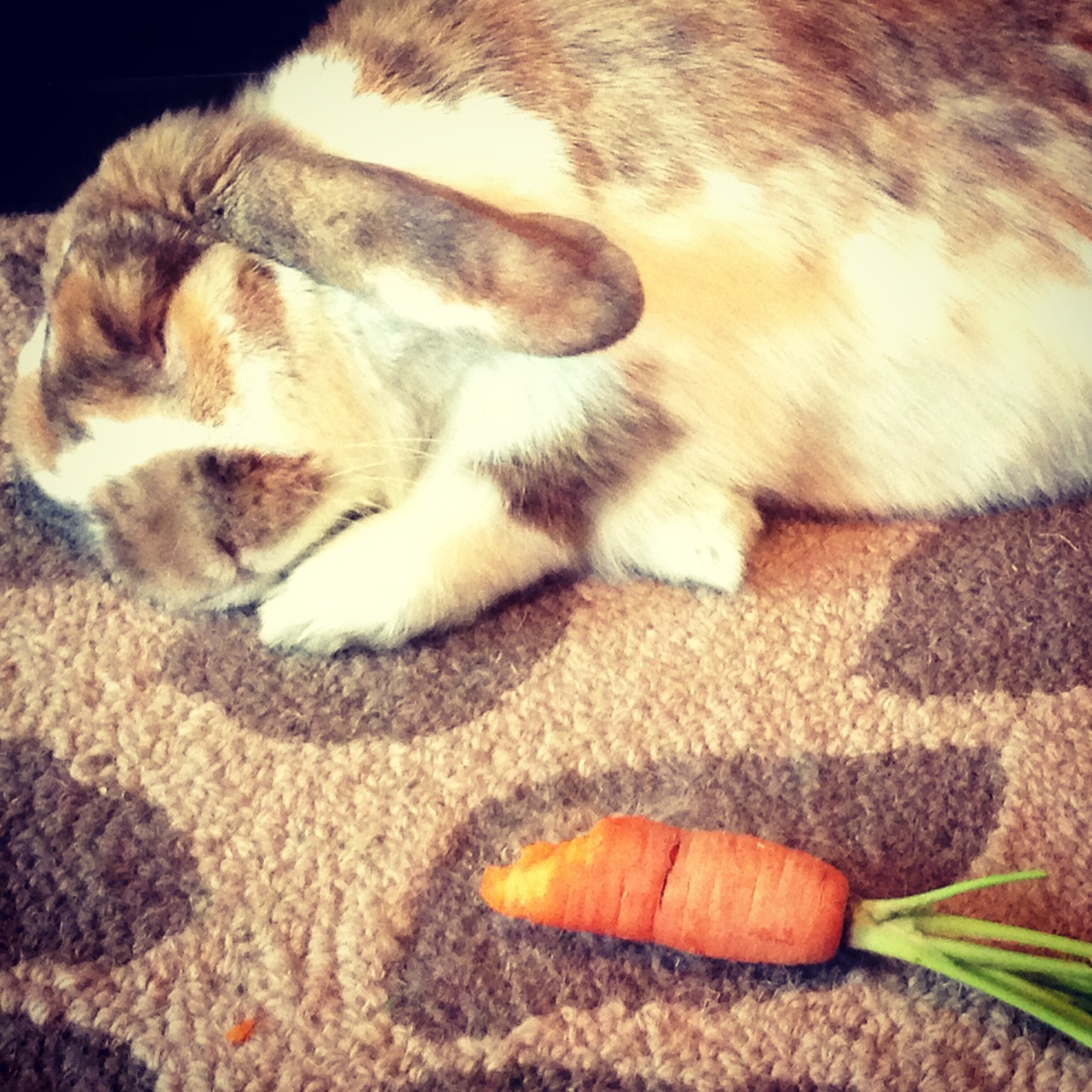 Sleeping Bunny Dreams of Carrots
