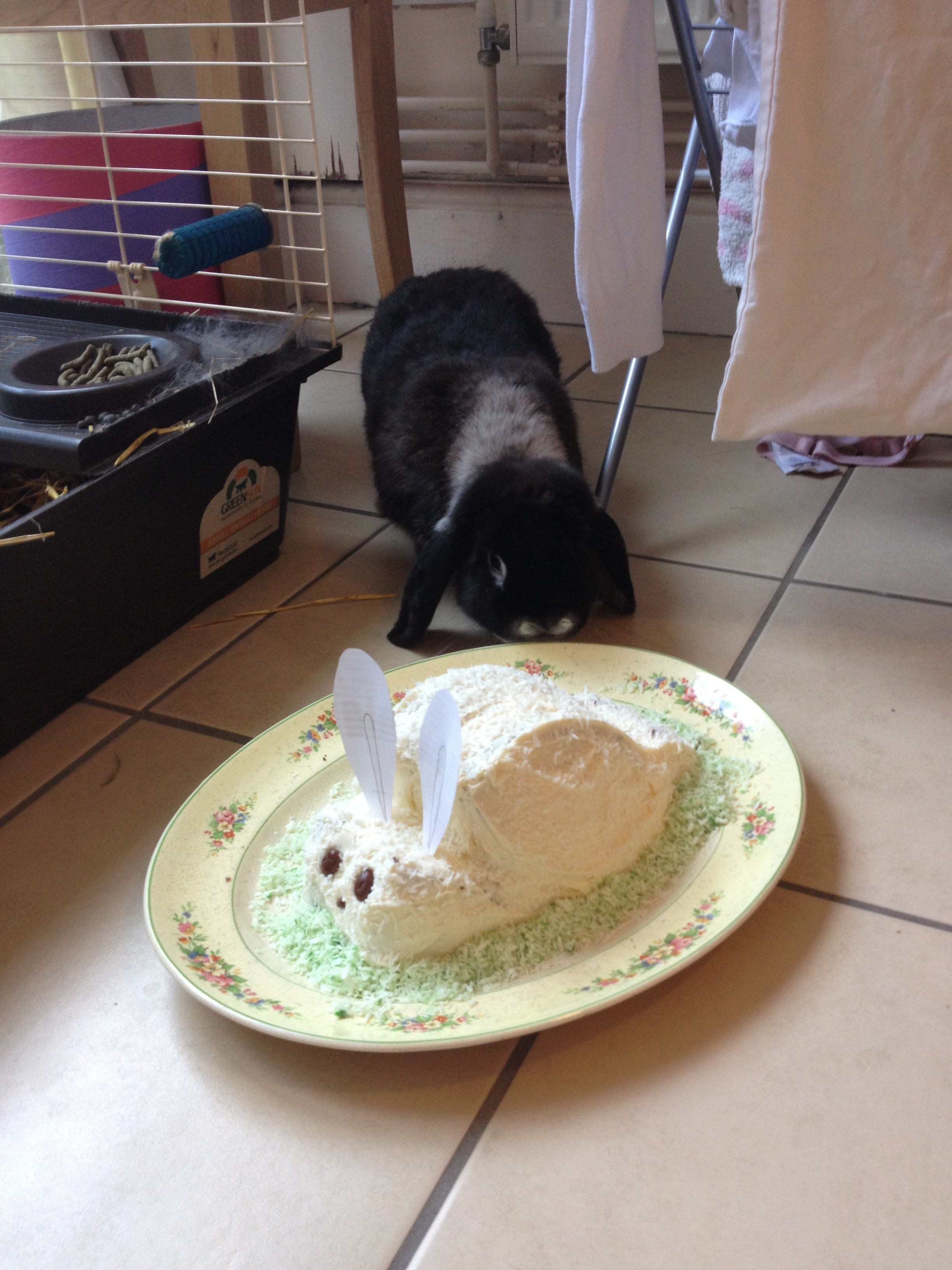 Bunny Is Puzzled by This New Bunny-Shaped, Sweet-Smelling Thing