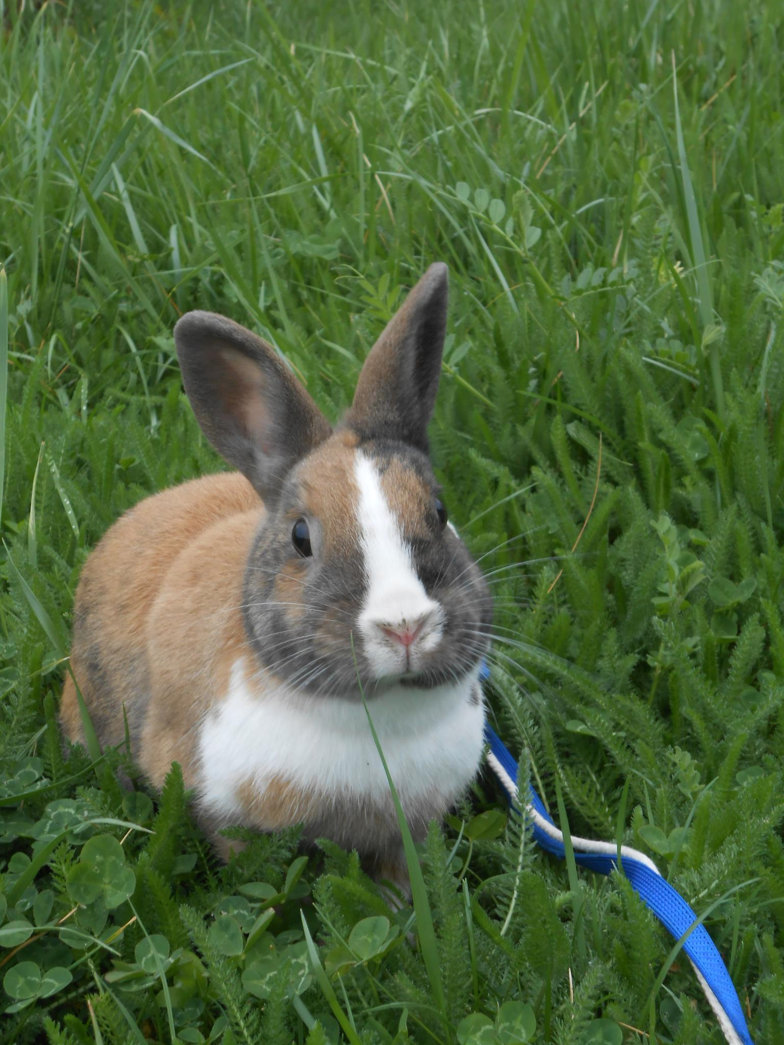 Bunny Stops Exploring Long Enough to Pose for a Photo