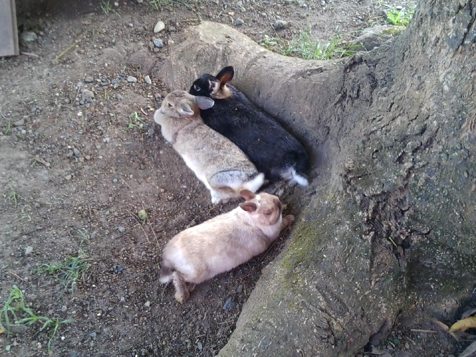 Bunnies Make Themselves Comfortable under the Mango Tree and Wait for the Fruit to Fall