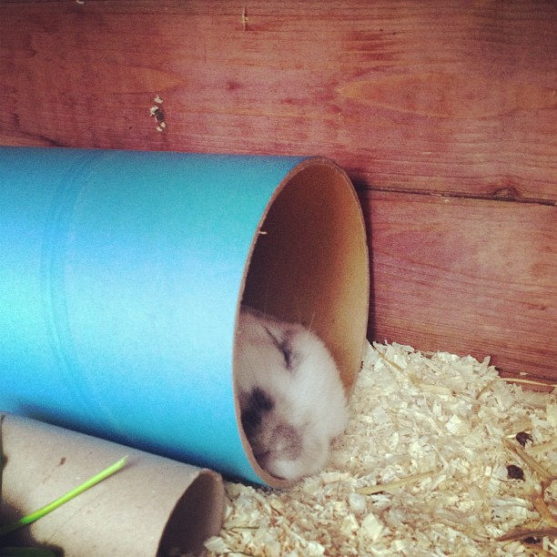 Shhh: Bunny Is Asleep in His Cardboard Tube