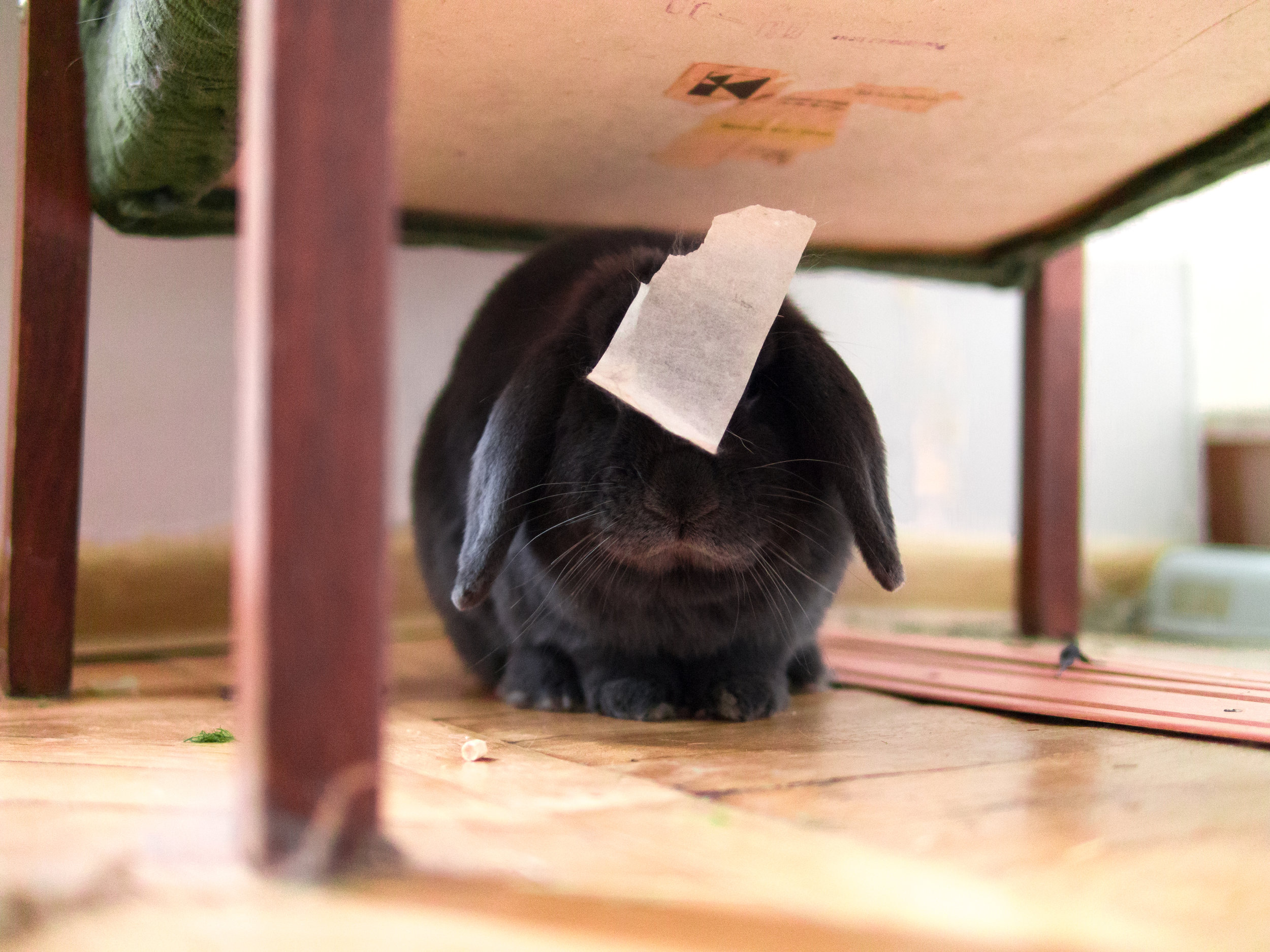Evidence of Bunny's Mischief Is Stuck to His Head